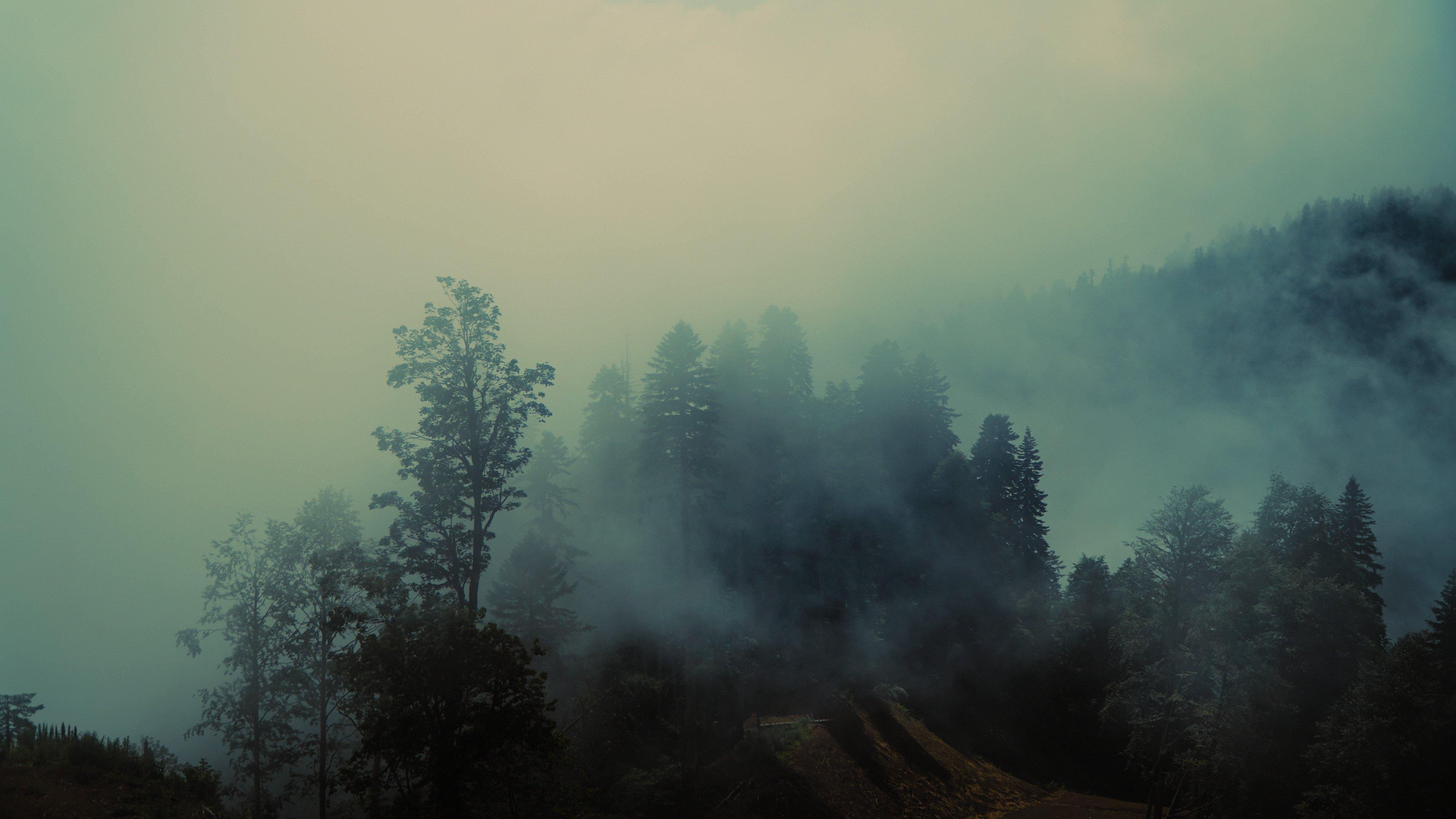 fog, volume, light, forest, tress, myst, shadows, landscape, colors, colorgrade, colorgrading, film, cine, cinematic, sochi, rosa khutor, Кыштымов Максим