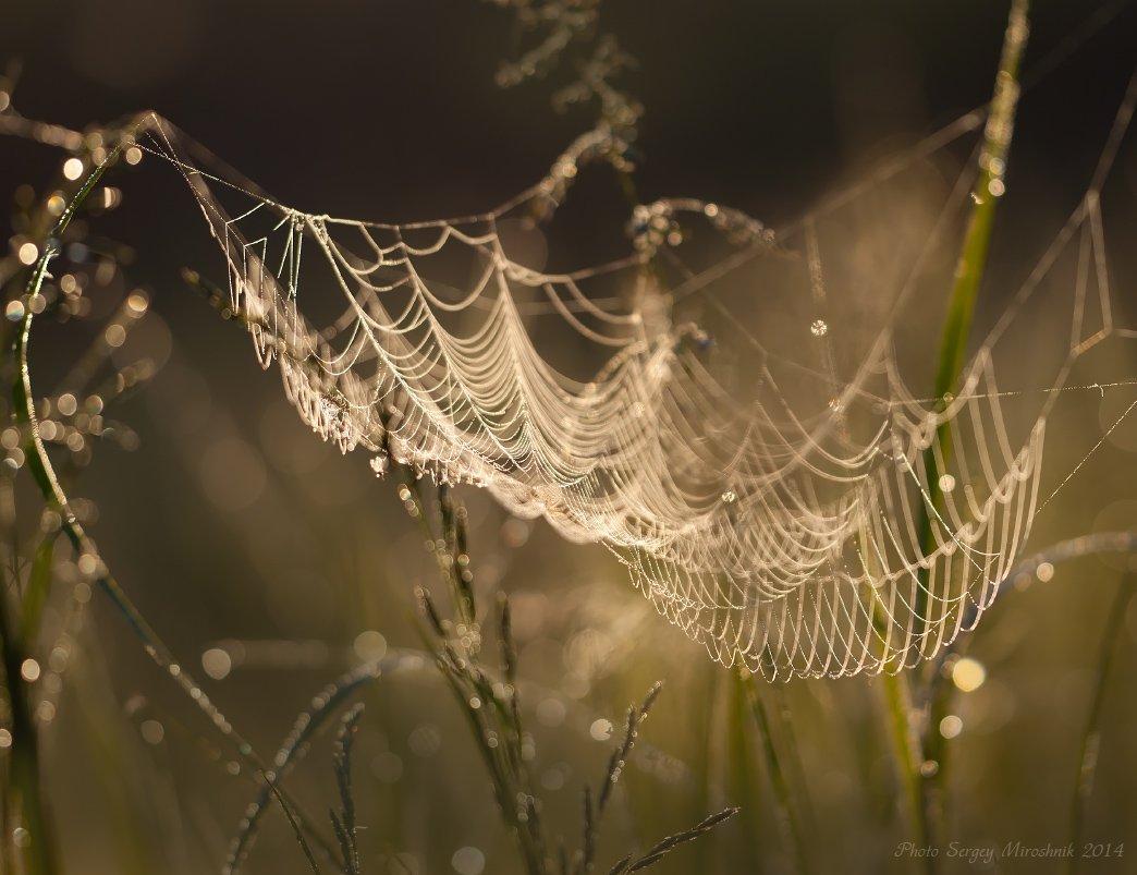 макро, паутина, весна, май, красиво, паук, утро, роса, украина, Сергій Мірошник