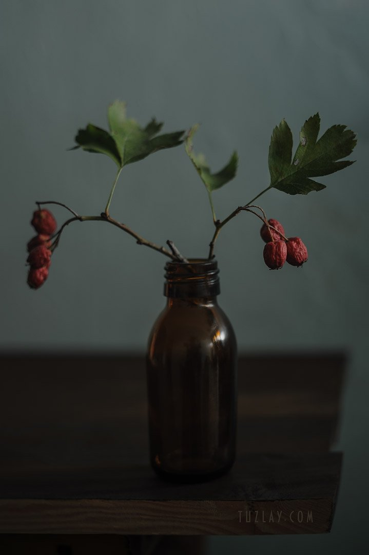 боярышник, бутылёк, красные ягоды, Владимир Тузлай