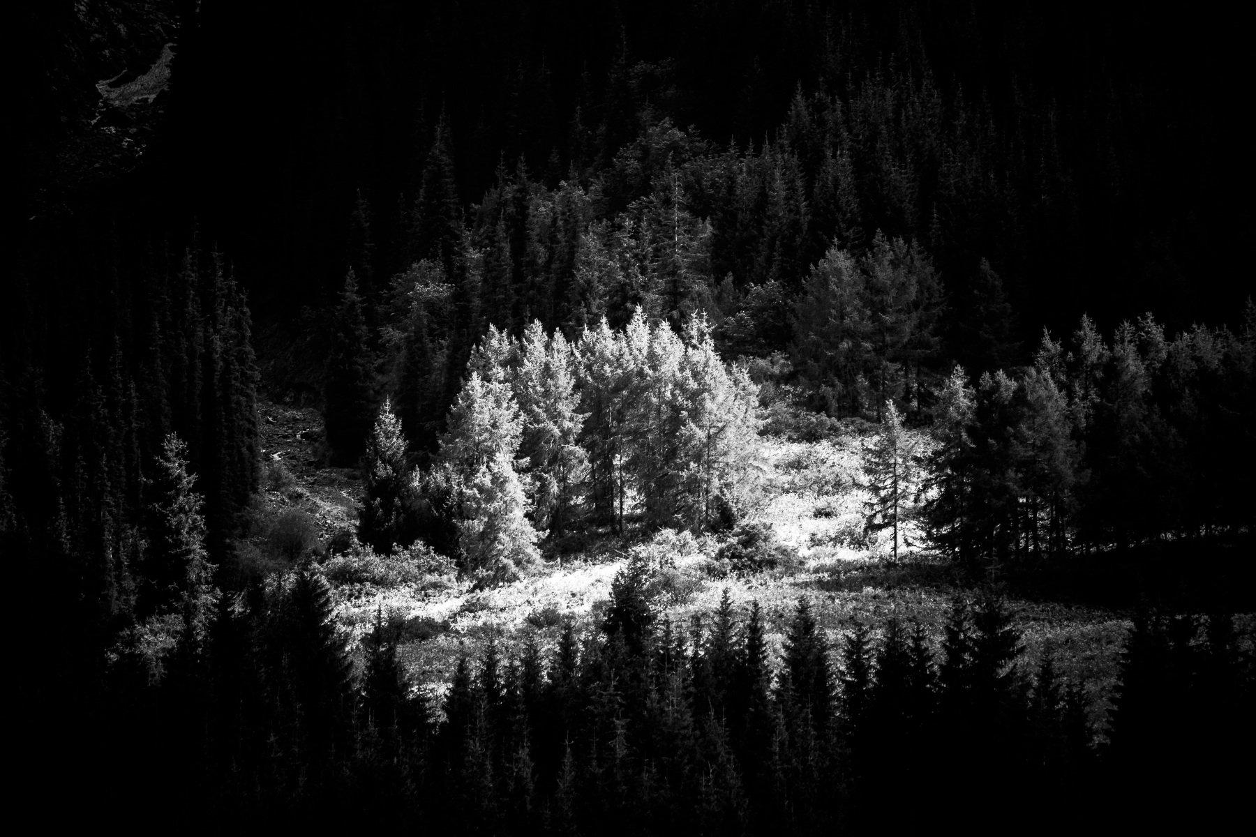 лес, природа, горы, пейзаж, черно-белое, свет, тень, Василий Шумкин
