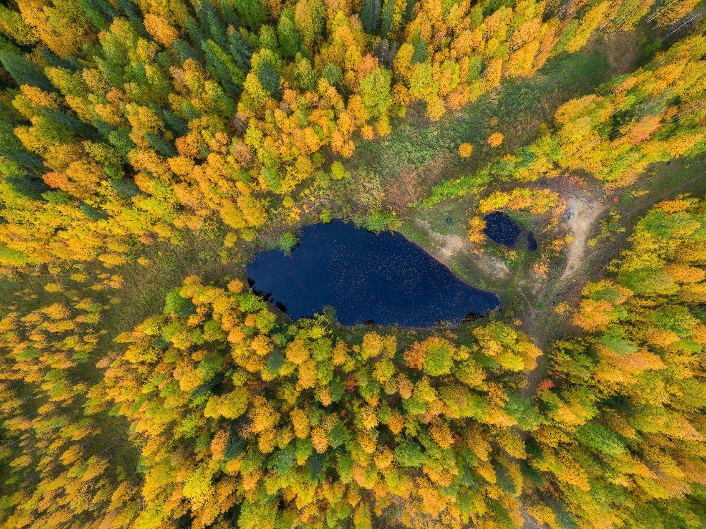 печора,коми,лес, Игорь Подобаев