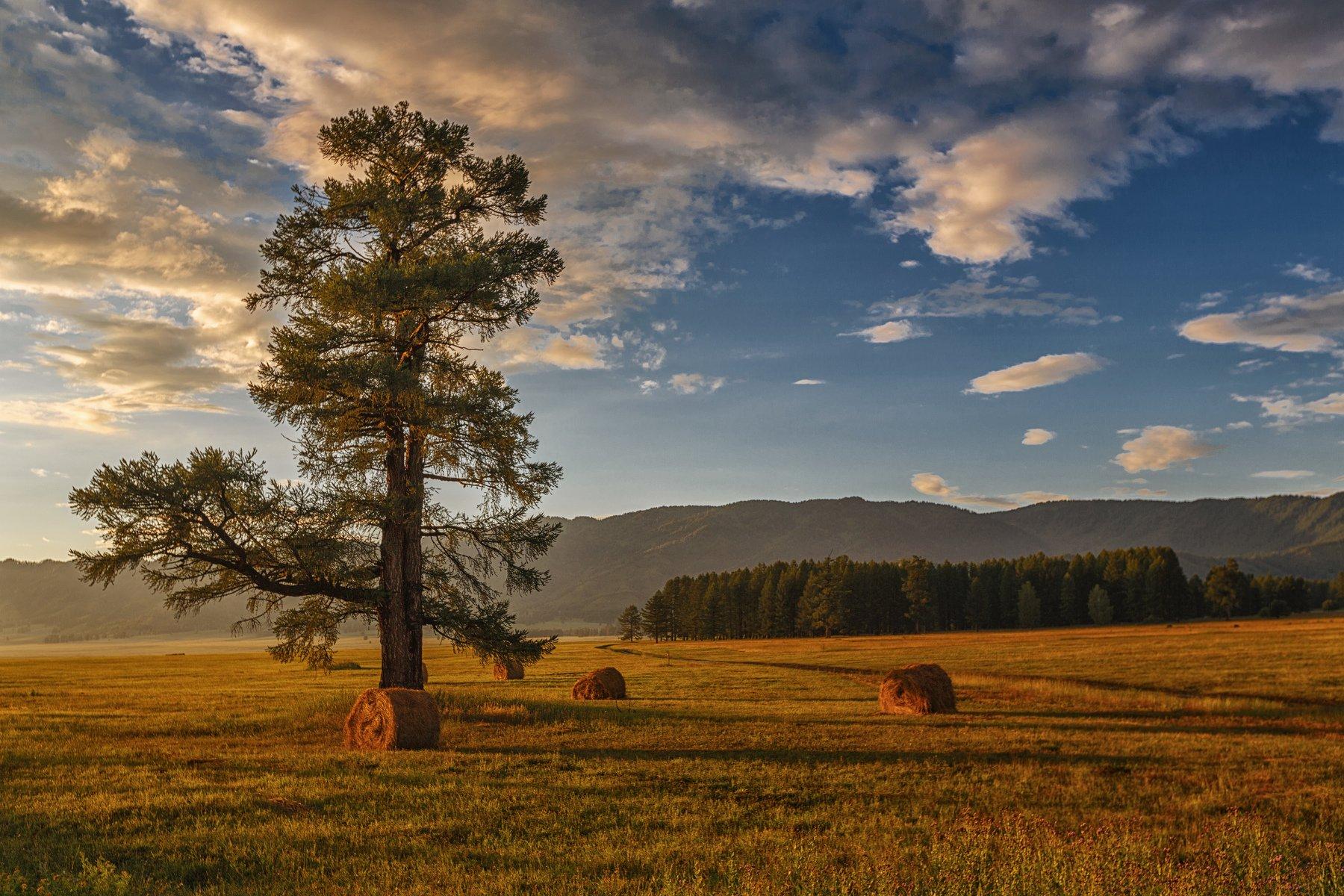 горы, облака, природа, алтай, рассвет, река, путешествие, россия, Шевченко Николай