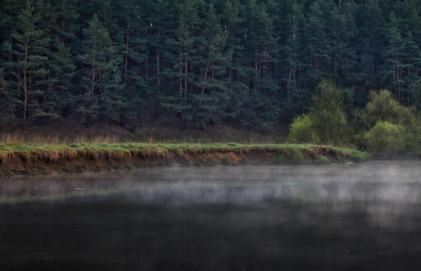 весна, река, лес, дымка,, Сергей Шабуневич