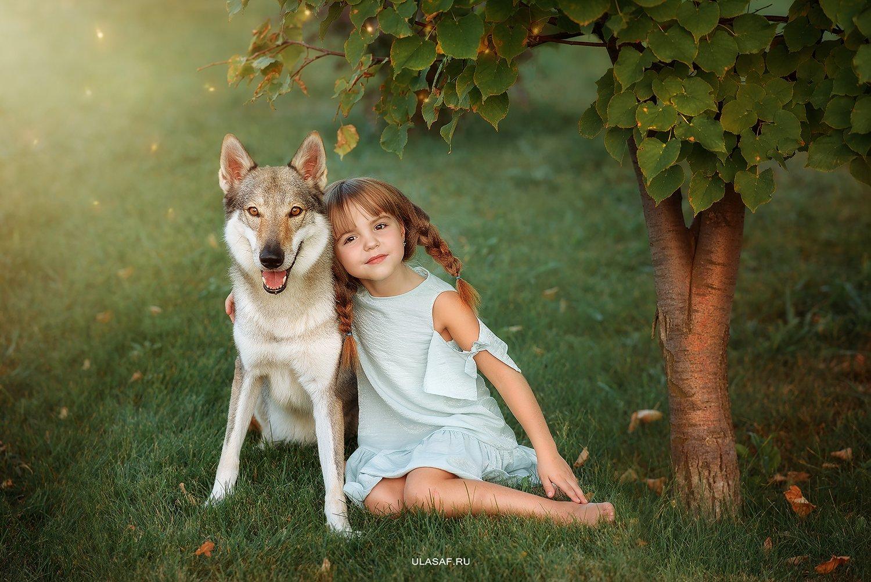 портрет, лето, девочка, girl, summer, волк, закат, вечер, животные, собака, dog, wolf, друзья, солнышко, лучи, happy, happiness, сказка, волшебство, Юлия Сафонова