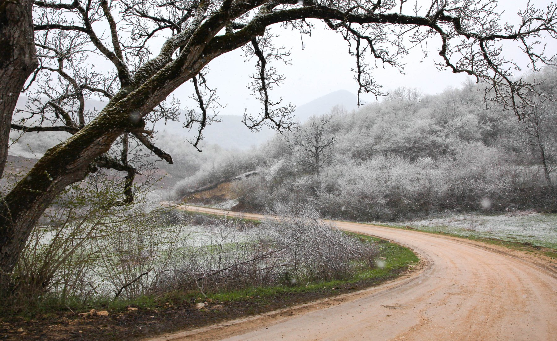 лес,поляна,природа,деревья,снег, Марат Магов