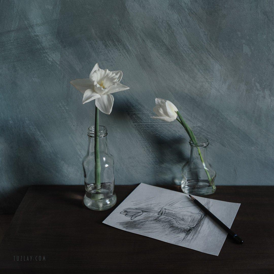 нарцисс, тюльпан, белый тюльпан, набросок, Владимир Тузлай