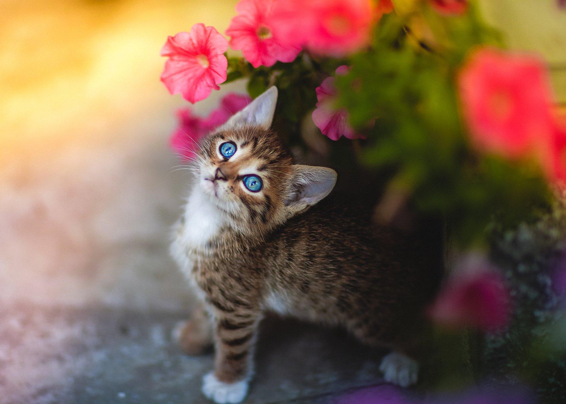 Самый красивый цветочек.*** Коротун Юрий