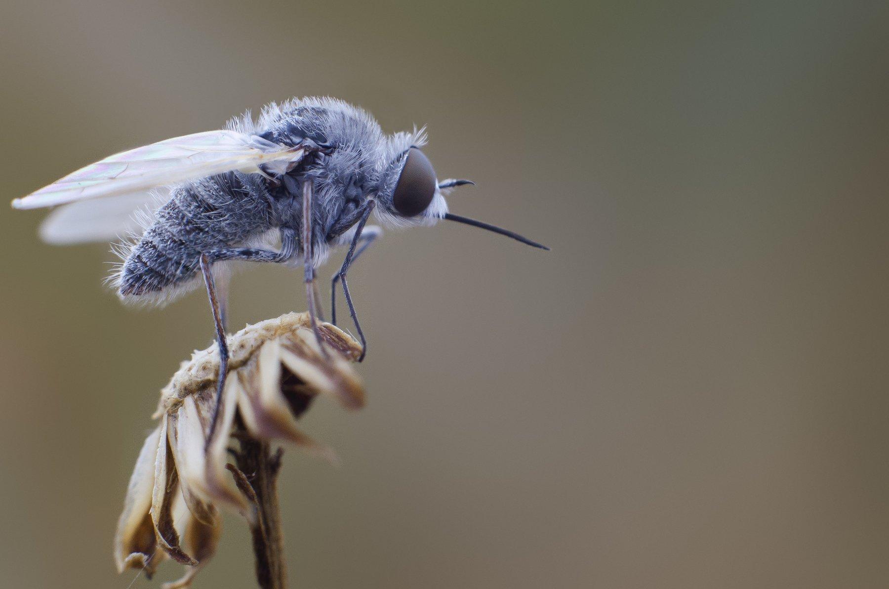 макро, насекомое, Ренат Тугушев