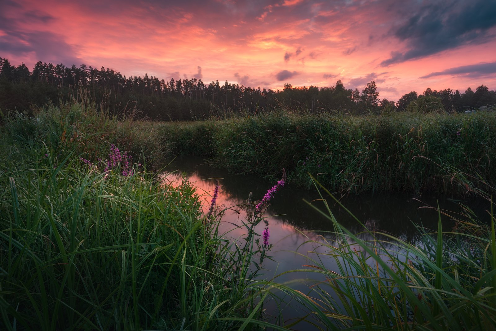 water sky clouds sunrise river wildflowers poland podlasie mood light colors, Maciej Warchoł