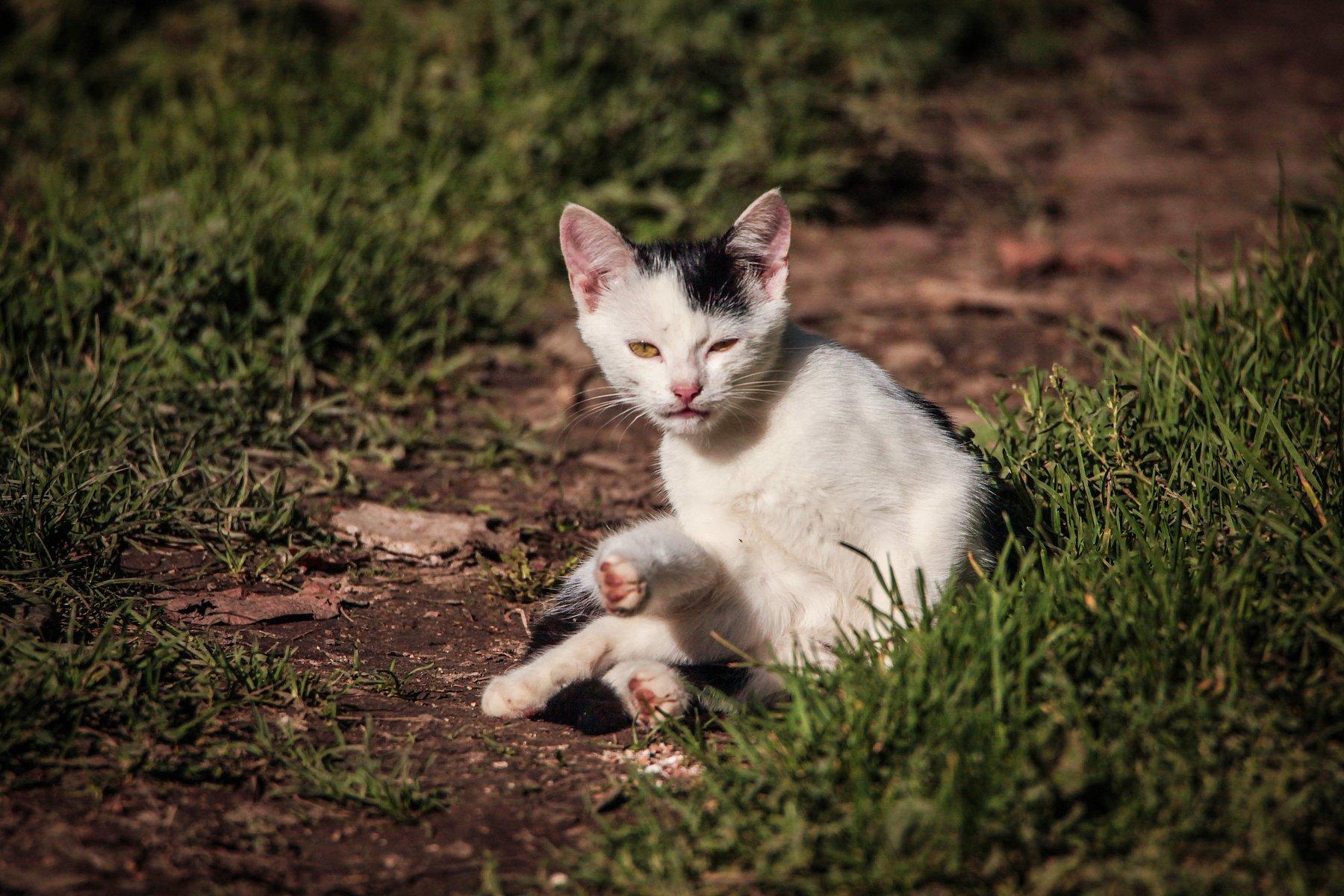 кошка,домашние животные,котёнок.., Марат Магов