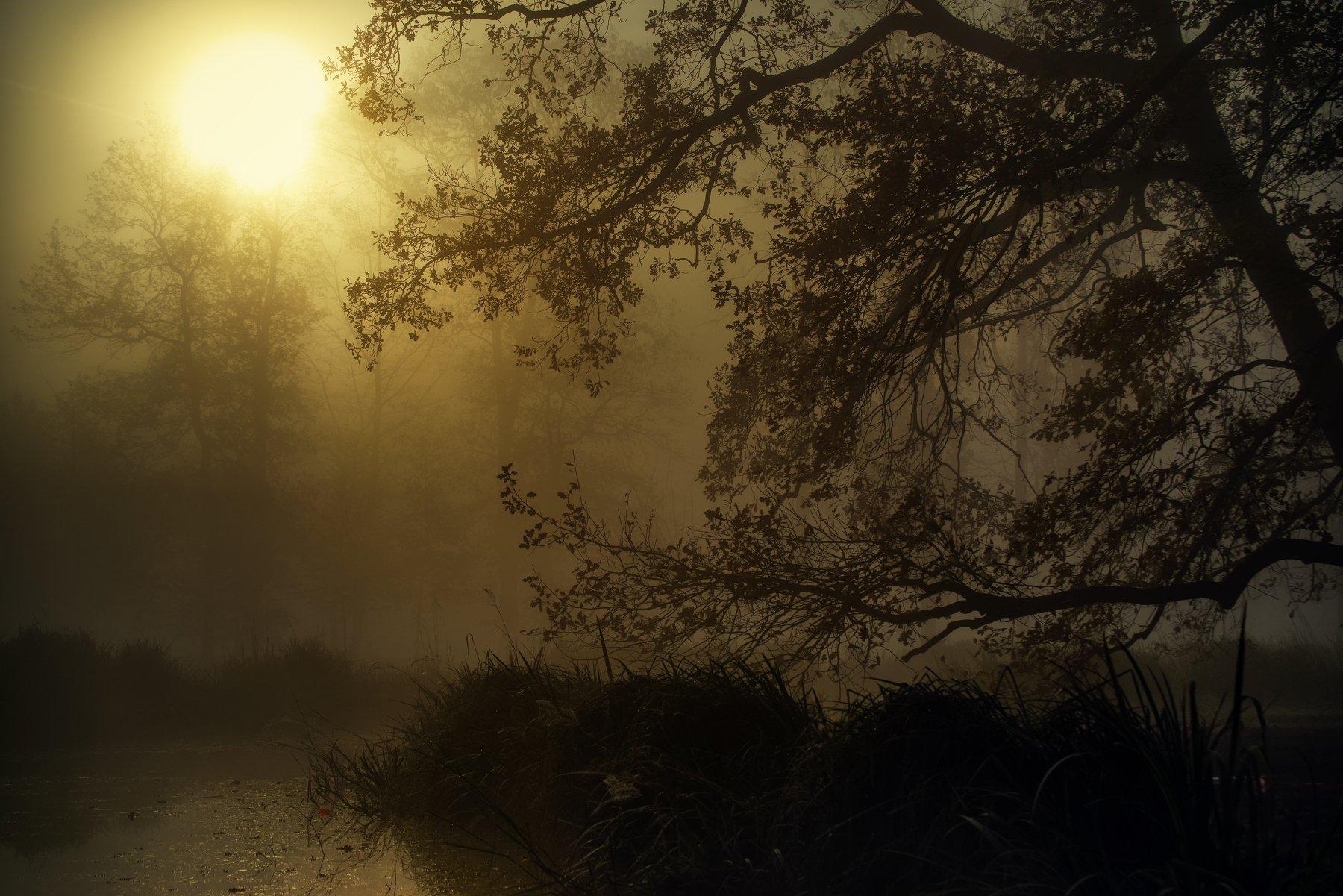 Утро Осень Прага Чехия Туман Солнце Деревья Природа Пейзаж Путешествия, Ожерельев Андрей