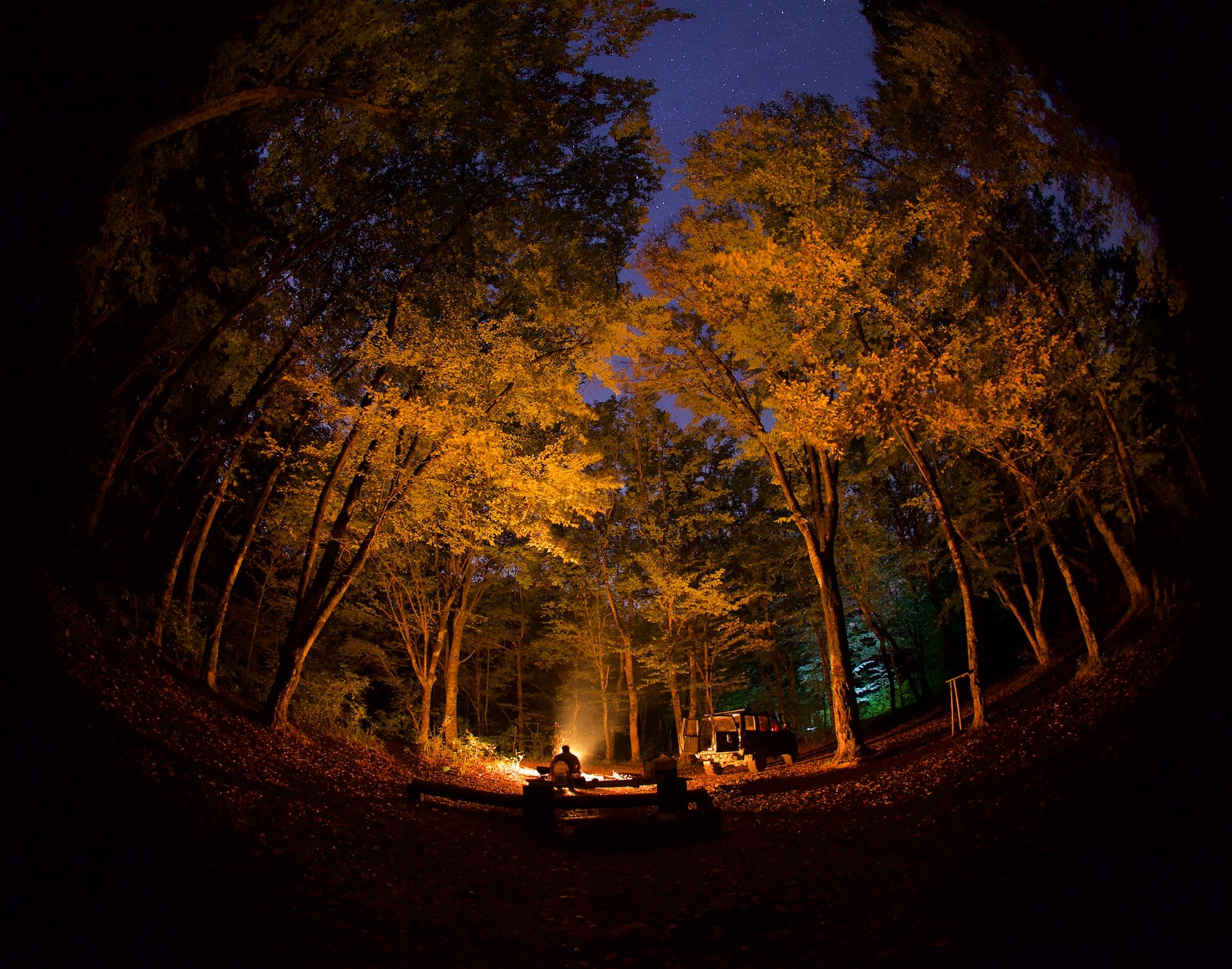 ночь, лес, осень, , Никифоров Егор
