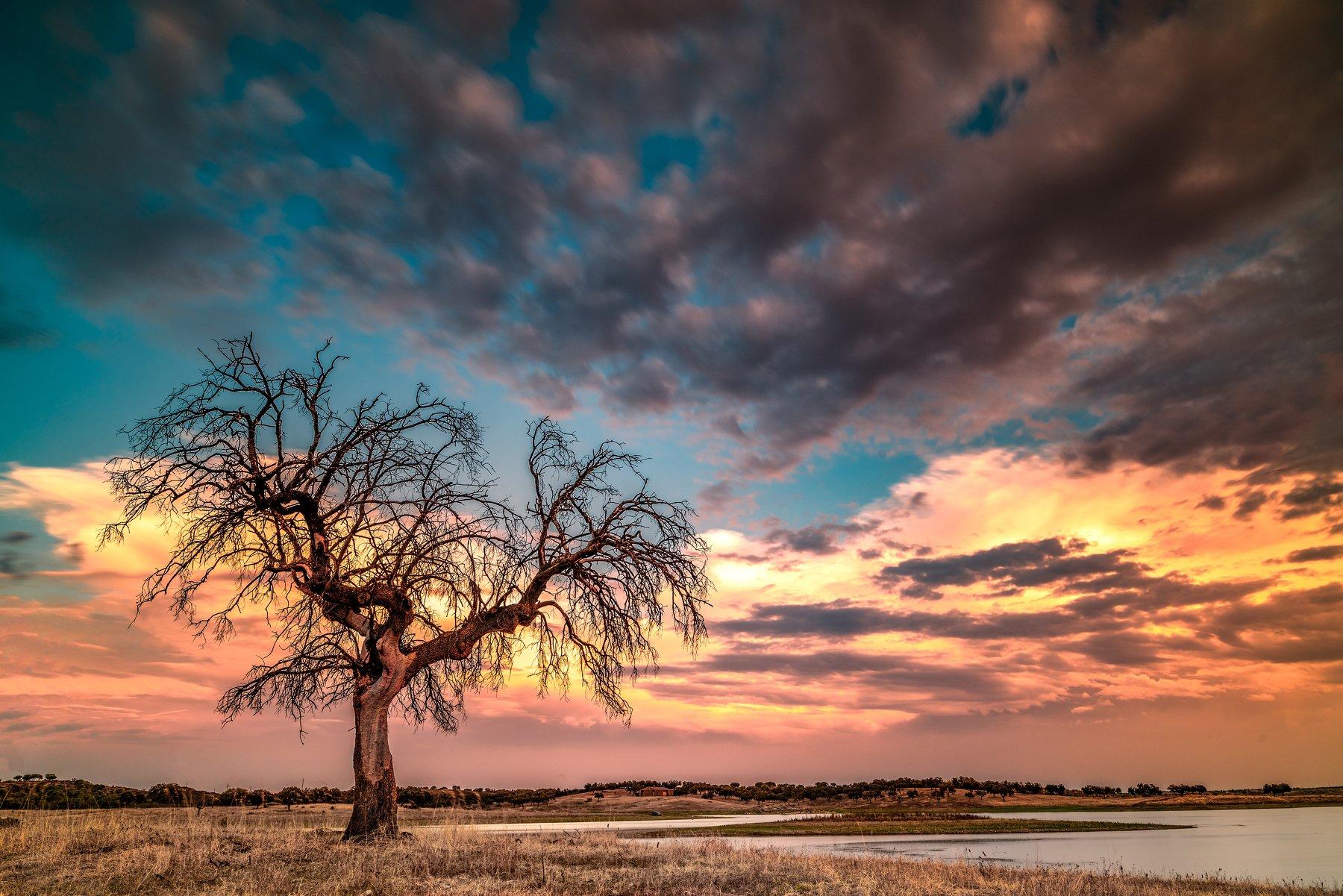 tree,sunset,lake,portugal,travel,lighthunter,lanscape,zeiss,nikond810,felix ostapenko,amazing view, Felix Ostapenko