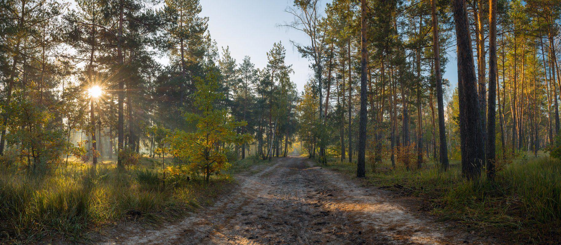 лес, осень, октябрь, утро, рассвет, дымка, Галанзовская Оксана