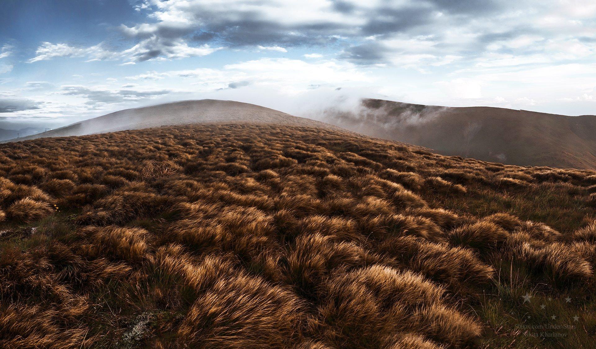 трава, драгобрат, карпаты, горы, склоны, Харланов Никита