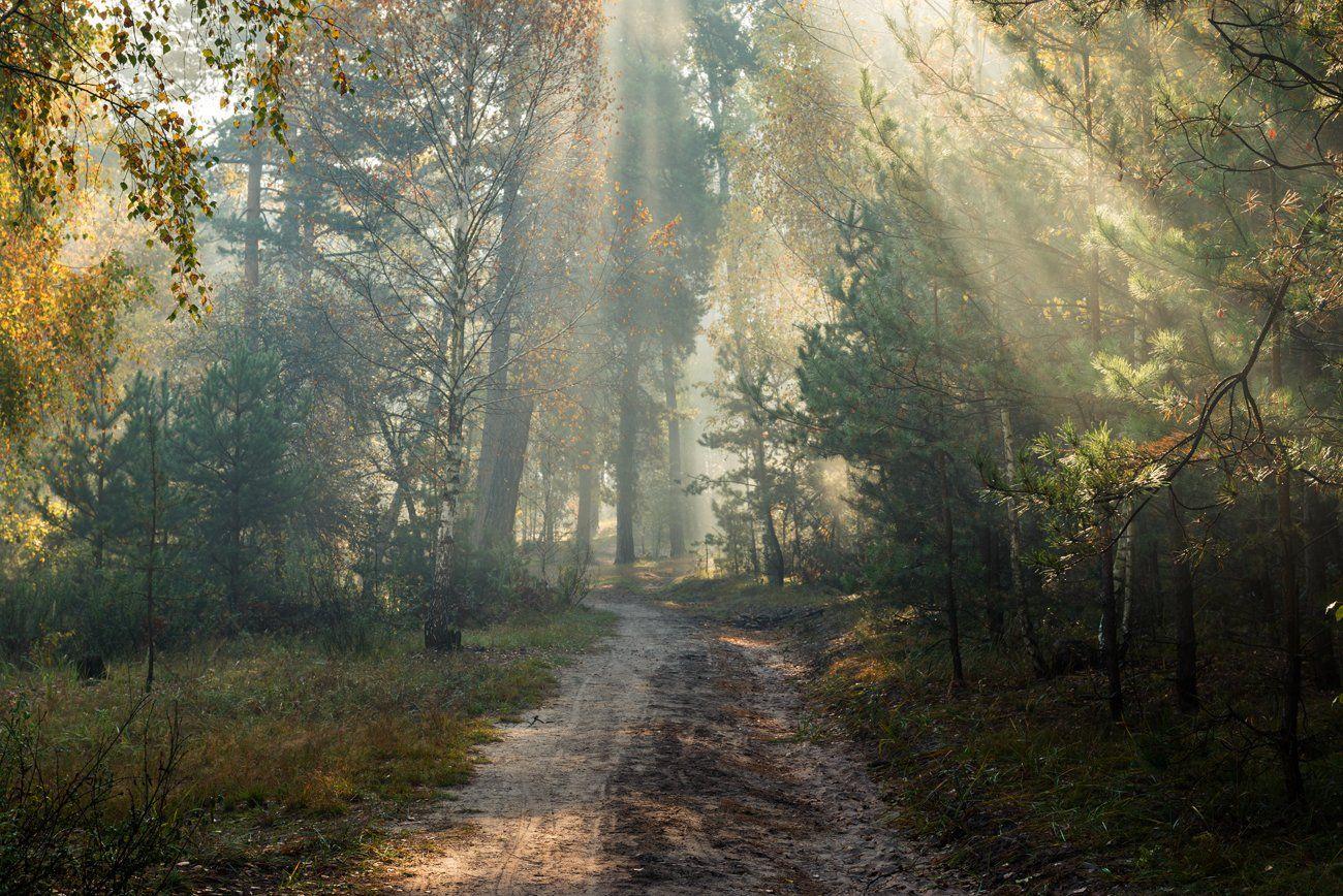 осень, октябрь, лес, свет, утро, рассвет, дымка, туман, kexb, Галанзовская Оксана