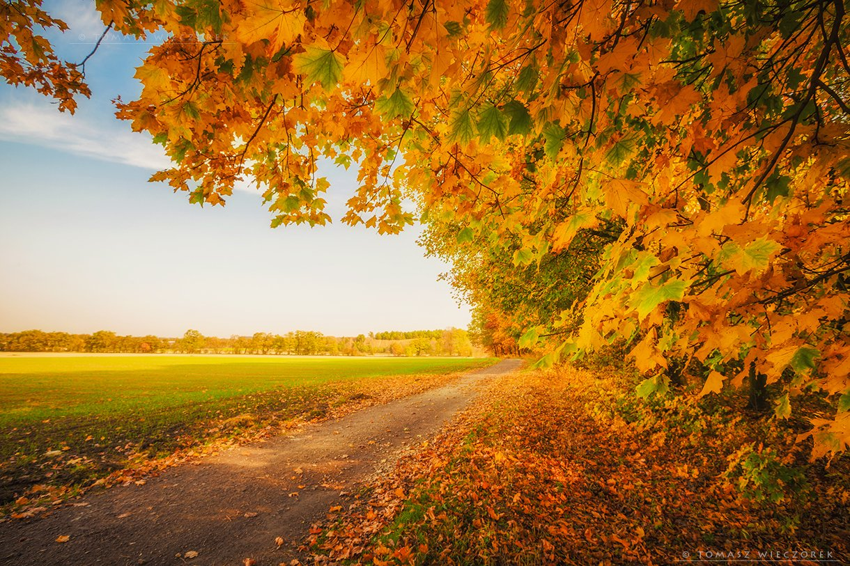autumn, colours, landscape, explosion, brown, poland, yellow, red, green, yellow, morning, sunrise, sunset, awesome, amazing, Tomasz Wieczorek