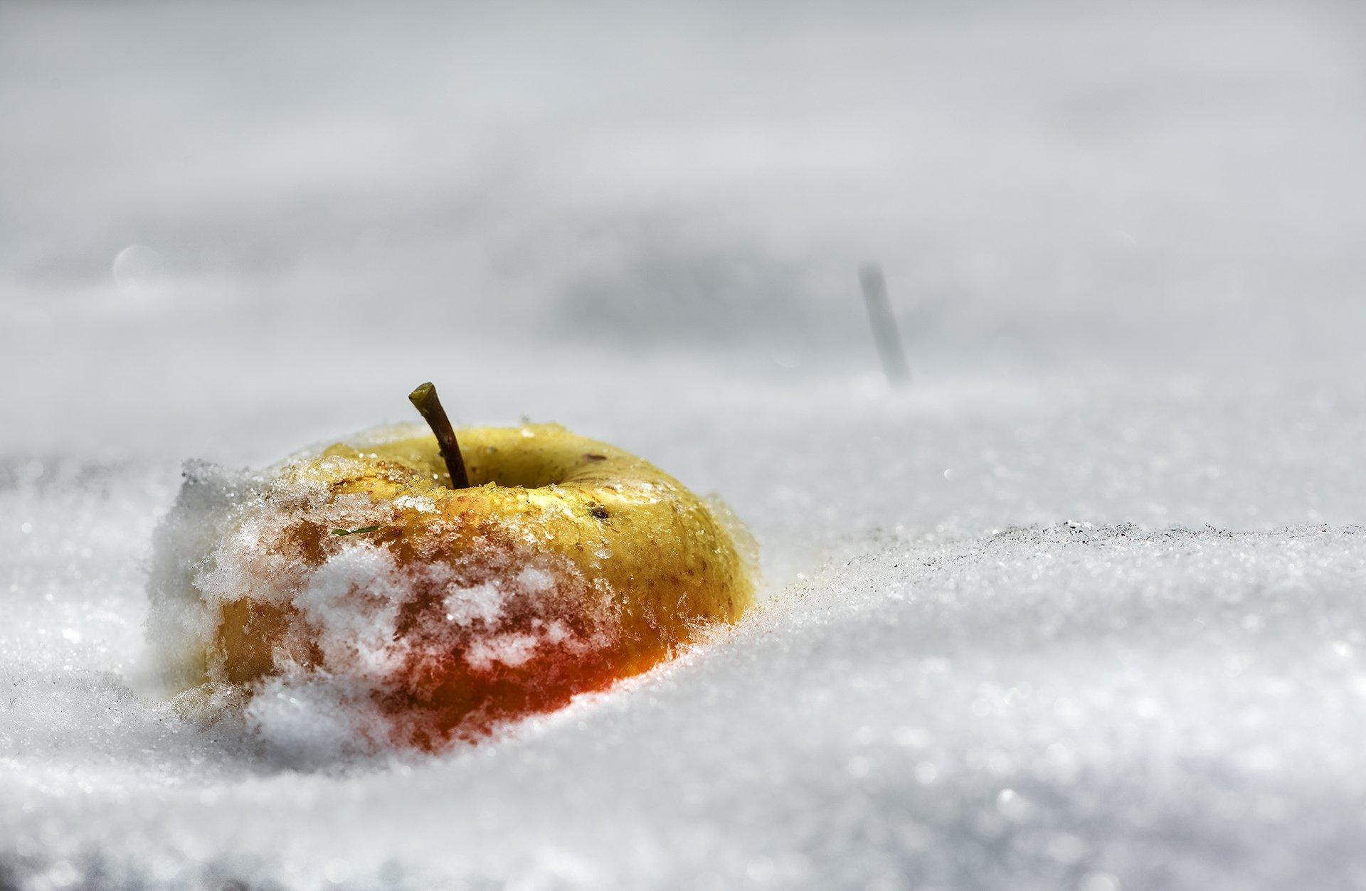 природа, макро, снег, яблоко, Неля Рачкова