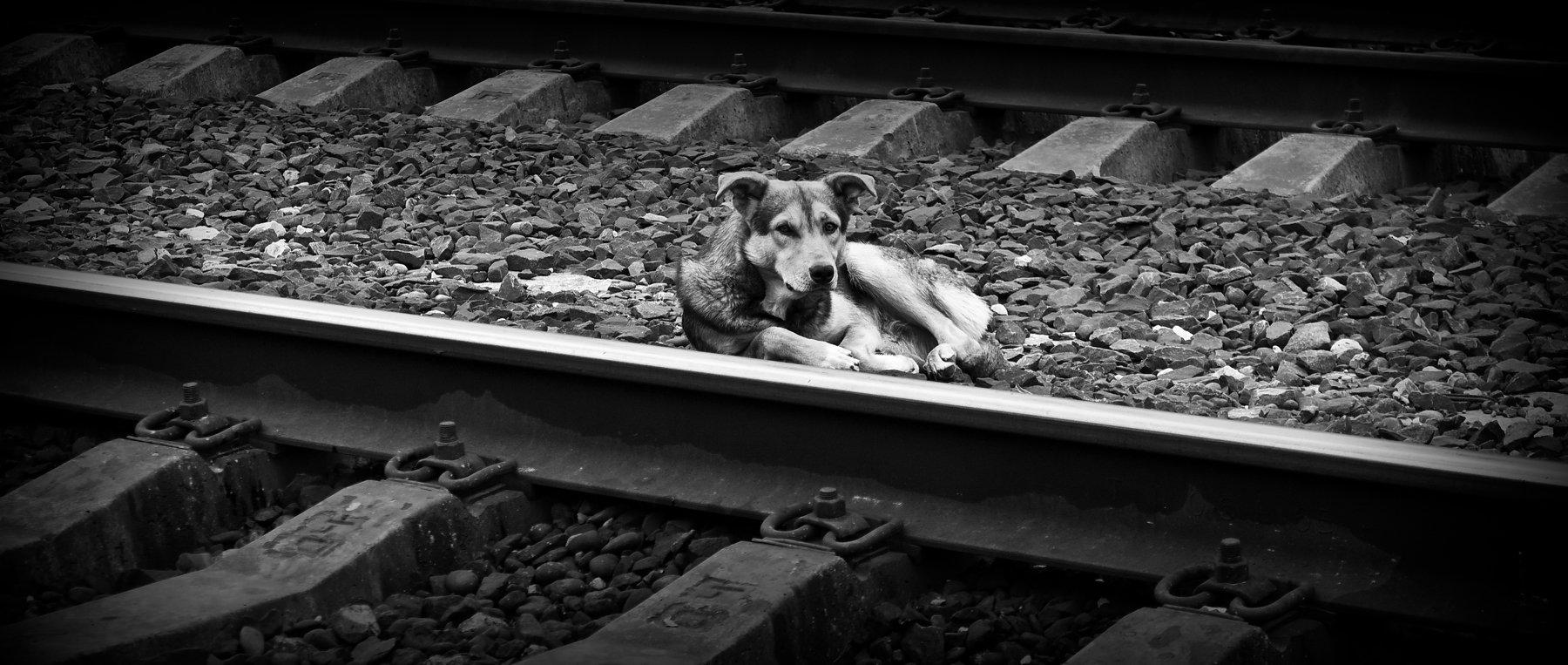 собака, пёс, животное, грусть, одиночка, собаки, Vladimir Kedrov