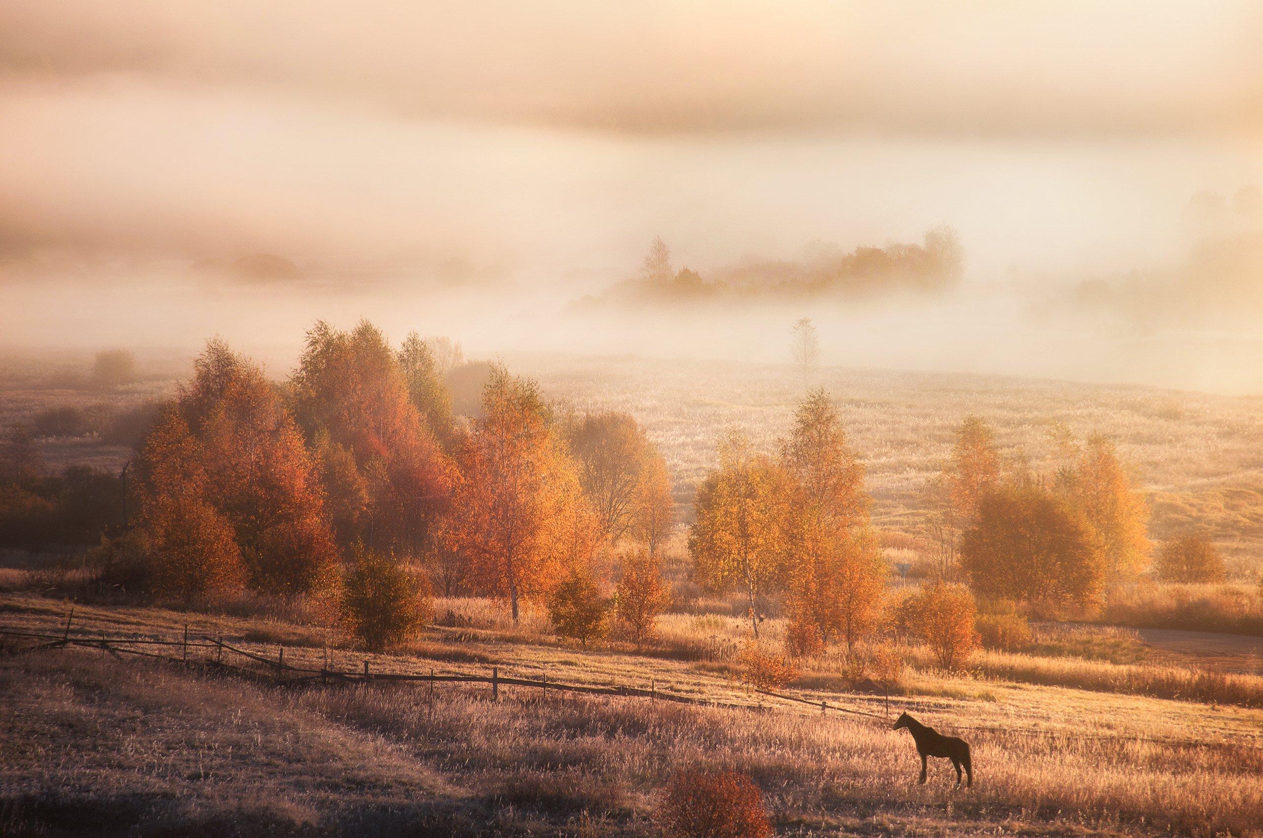 осень, природа, пейзаж, солнце, туман, лошадь, рассвет, утро, autumn, nature, landscape, sun, fog, horse, dawn, morning, Алексей Сергованцев