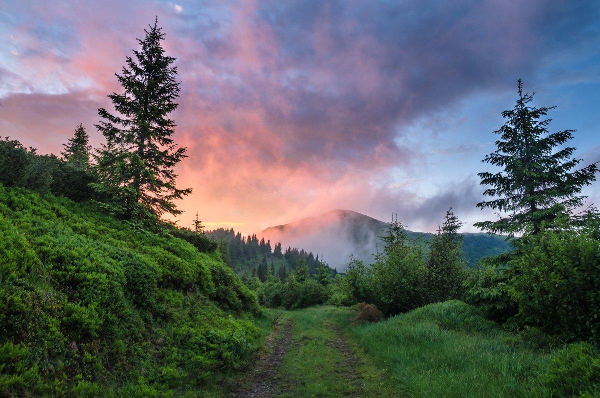 карпаты, горы, лето, вечер, облака, красиво, июнь, мармаросы, лес, деревья, путешествие, небо, закат., Сергій Мірошник