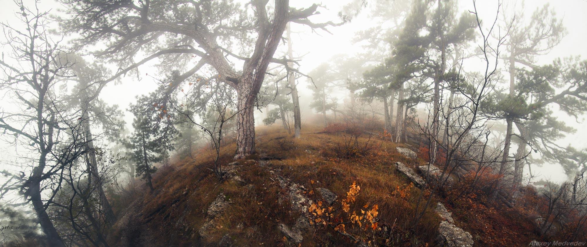 Крым горы, Алексей Медведев