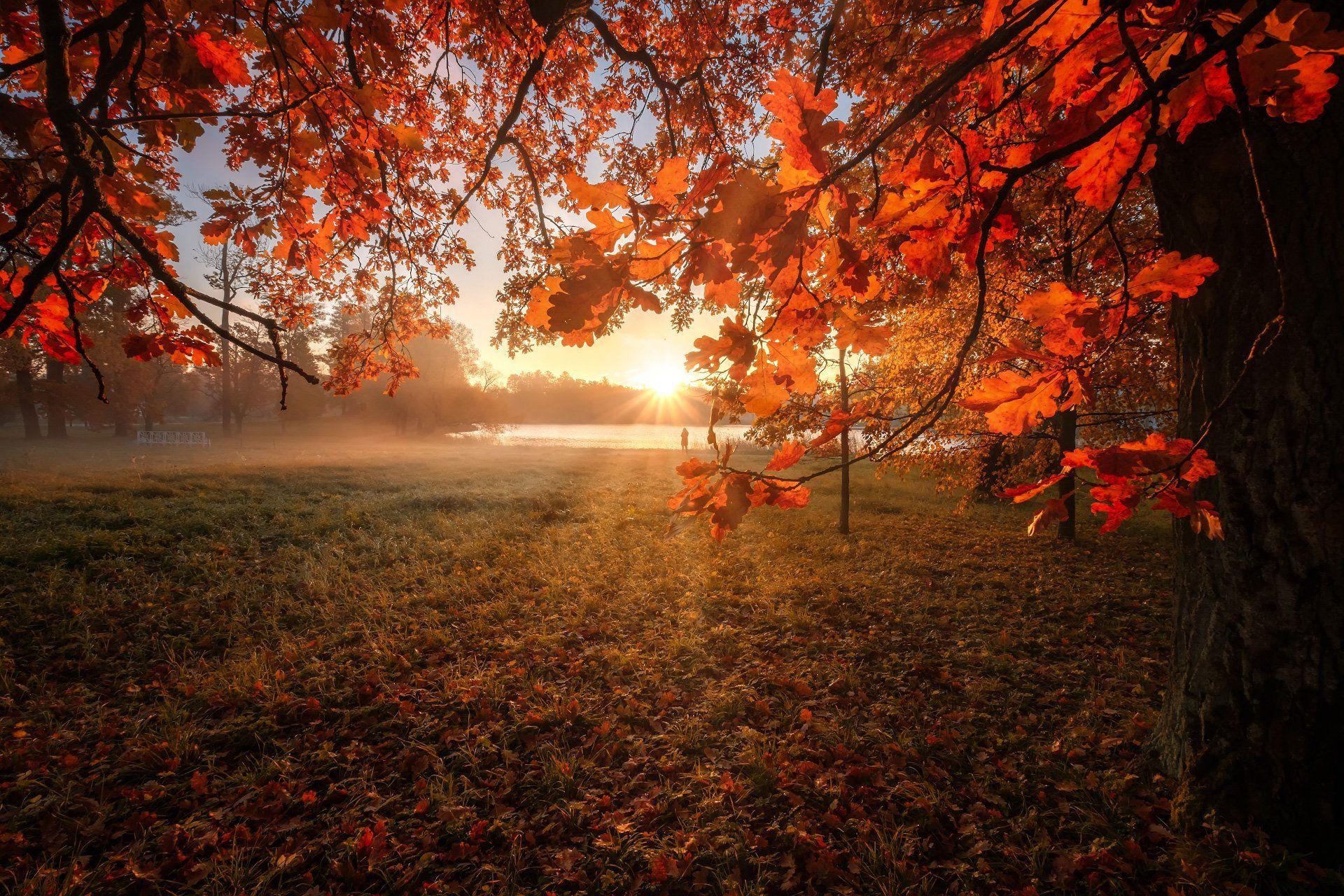 Солнце в листьях.  Андрей Чиж