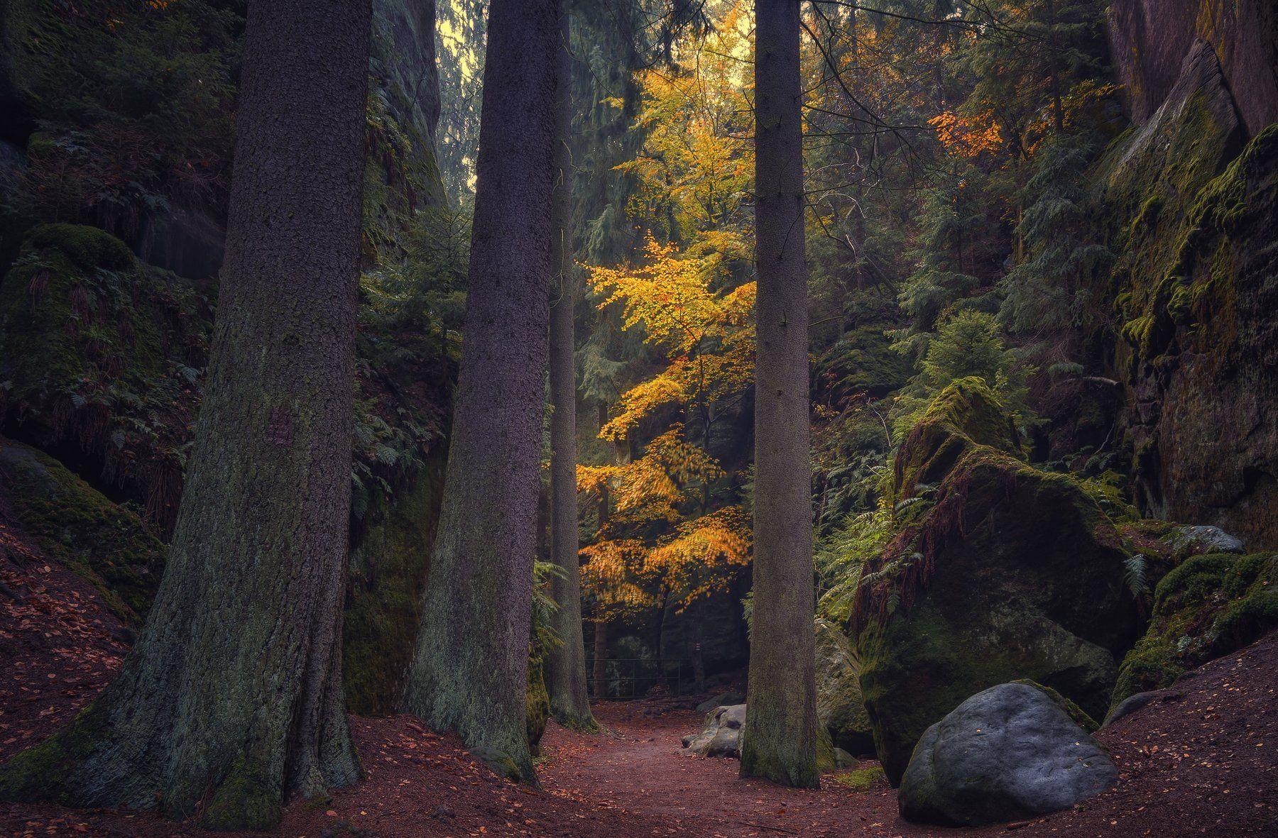 природа лес деревья осень листва утро туман путешествия пейзаж тени  чехия скалы горы, Ожерельев Андрей
