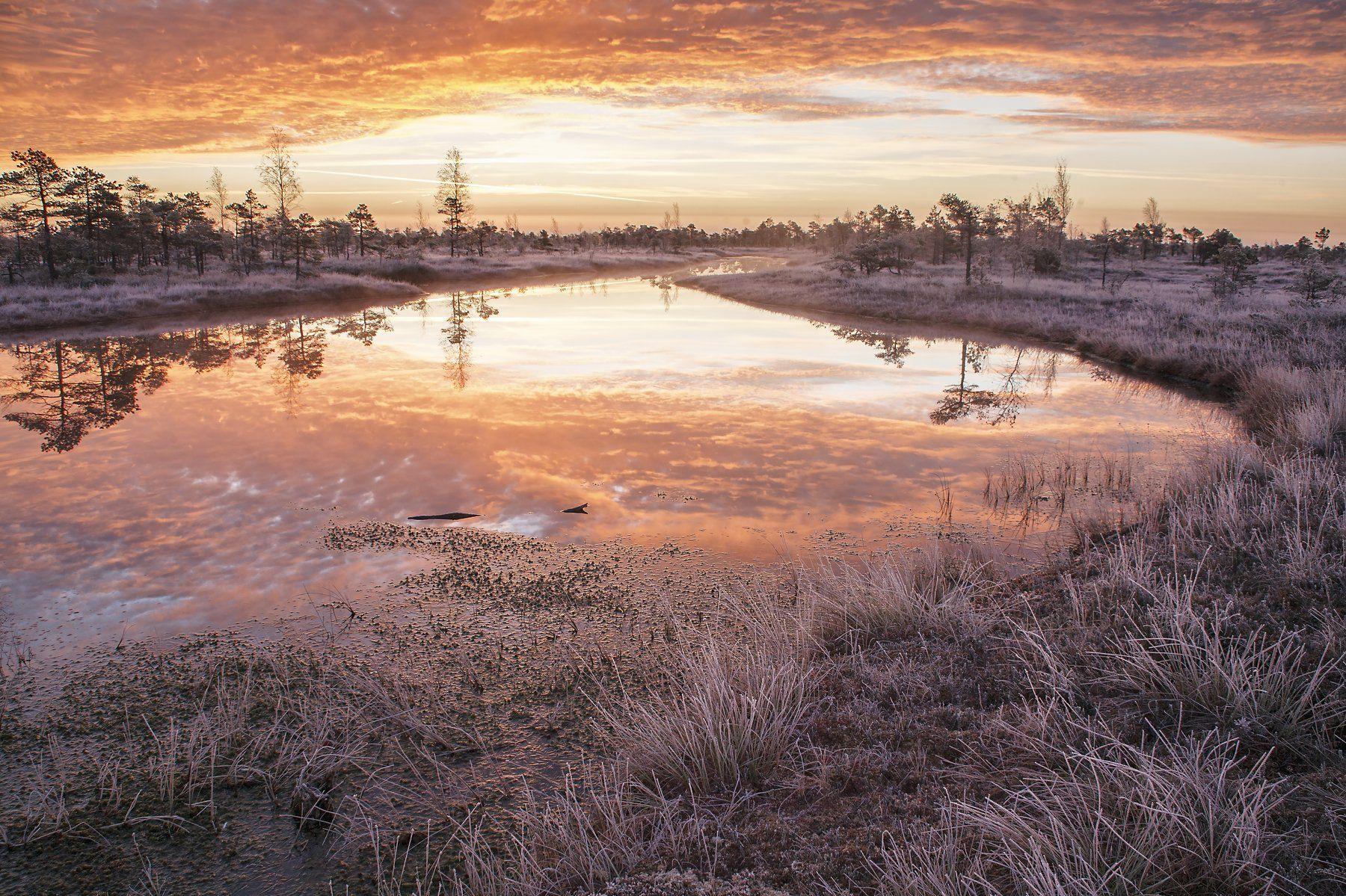 болото снег утро, Aleksandr