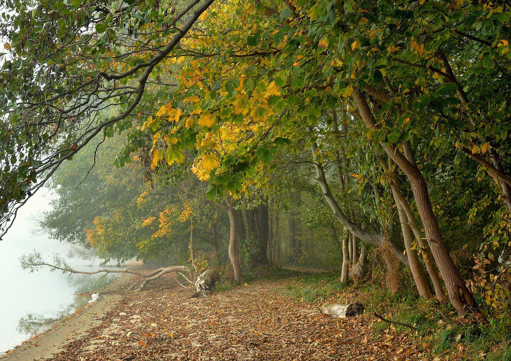 walk lake park garden foggy morning mist magic dranikowski trees autumn fall, Radoslaw Dranikowski