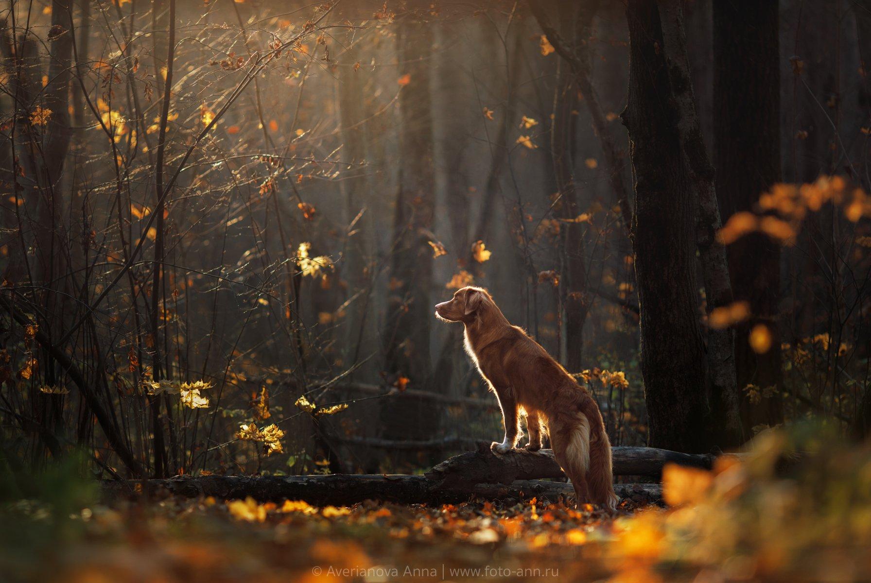 собака, природа, Анна Аверьянова