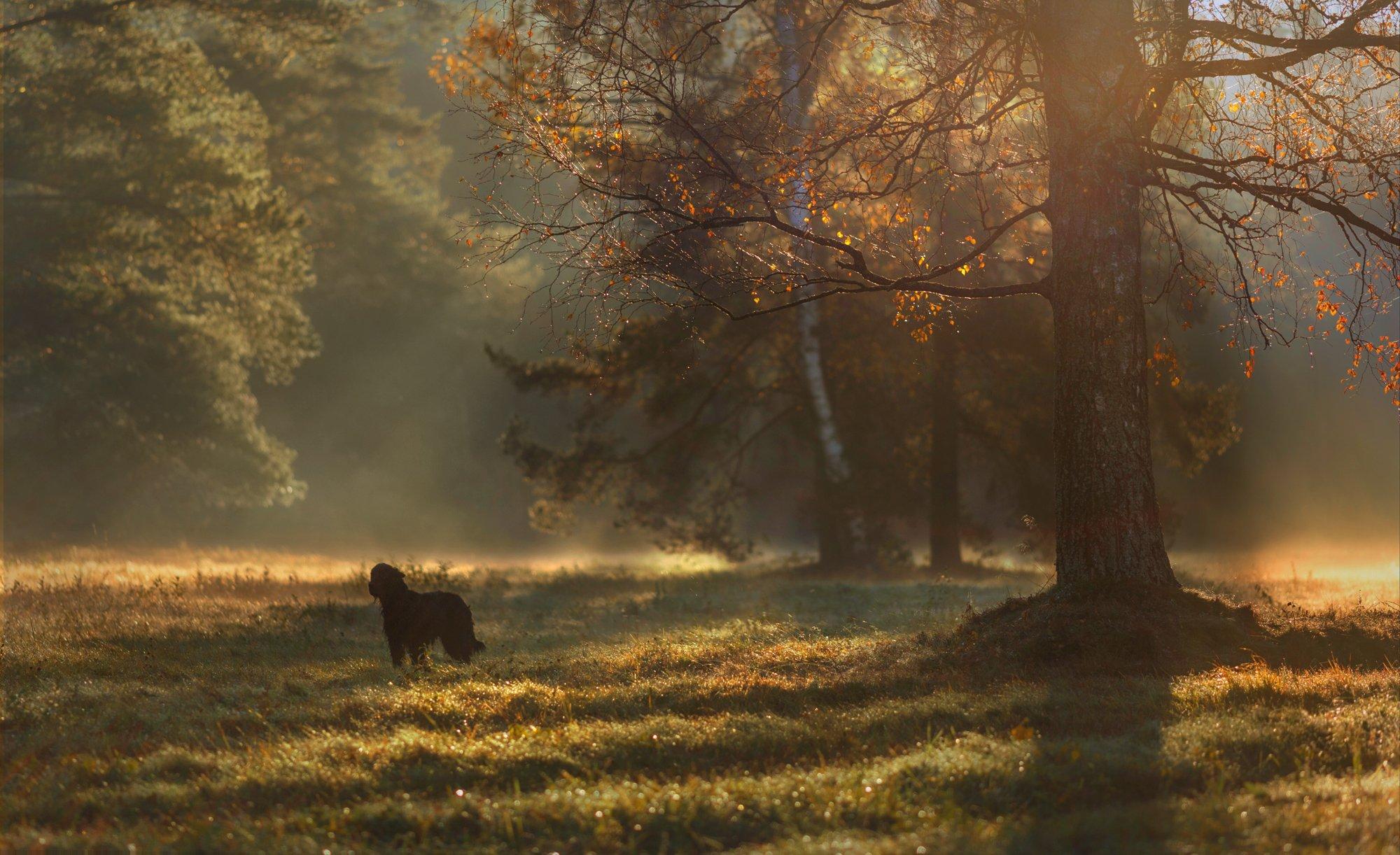 питер, павловск. павловскийпарк, пейзаж, Таня She (Aiya)