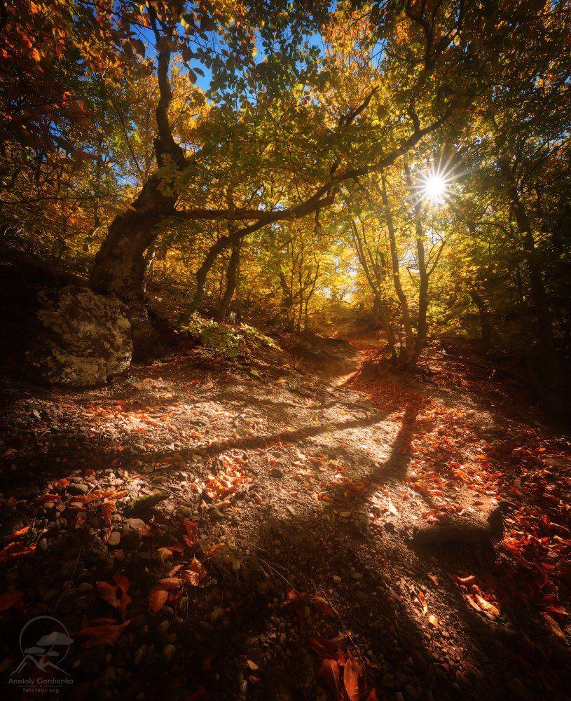 пейзаж, природа, лес, демерджи, крым,солнце,осень, Анатолий Гордиенко www.fototour.org