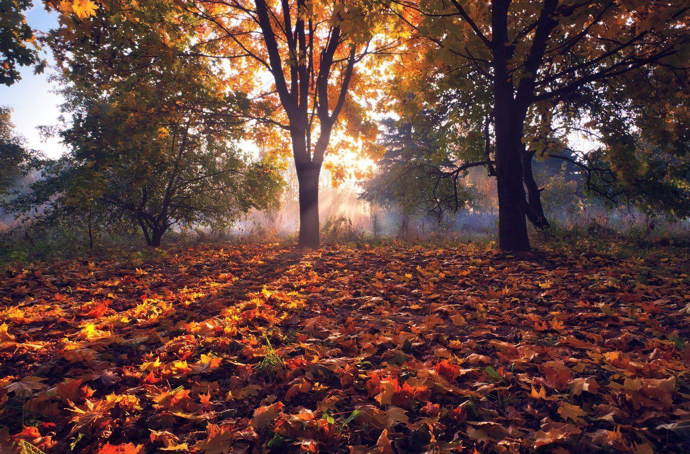 Рыжая осень Сергей Шабуневич