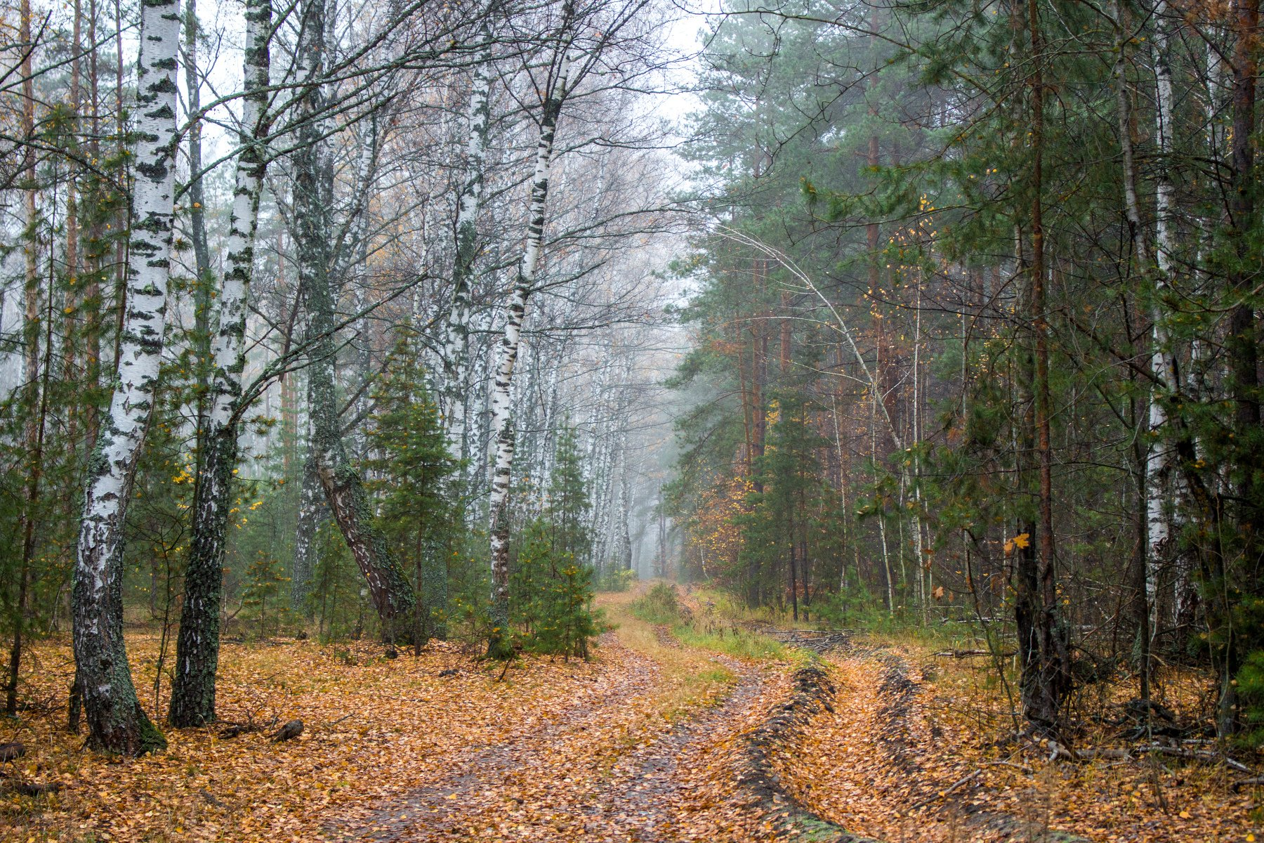 лес, заповедник, осень, туман, Руслан Востриков