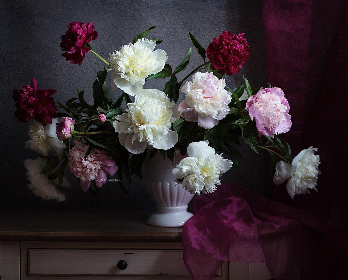 натюрморт, фотонатюрморт, цветы, пионы, свет, тень, лето, алина ланкина, Алина Ланкина