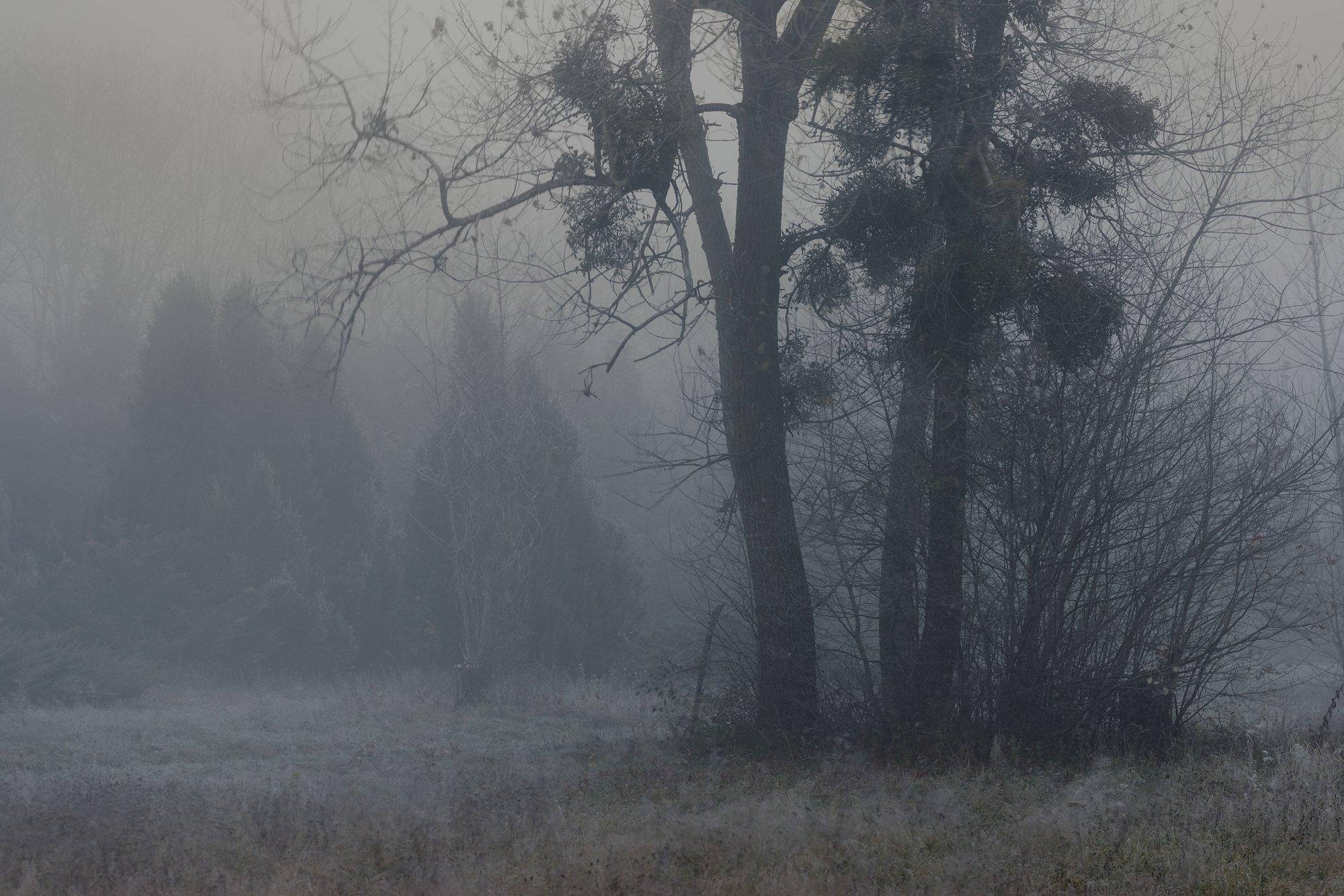 осень рассвет лес листва туман, Александр Жарников