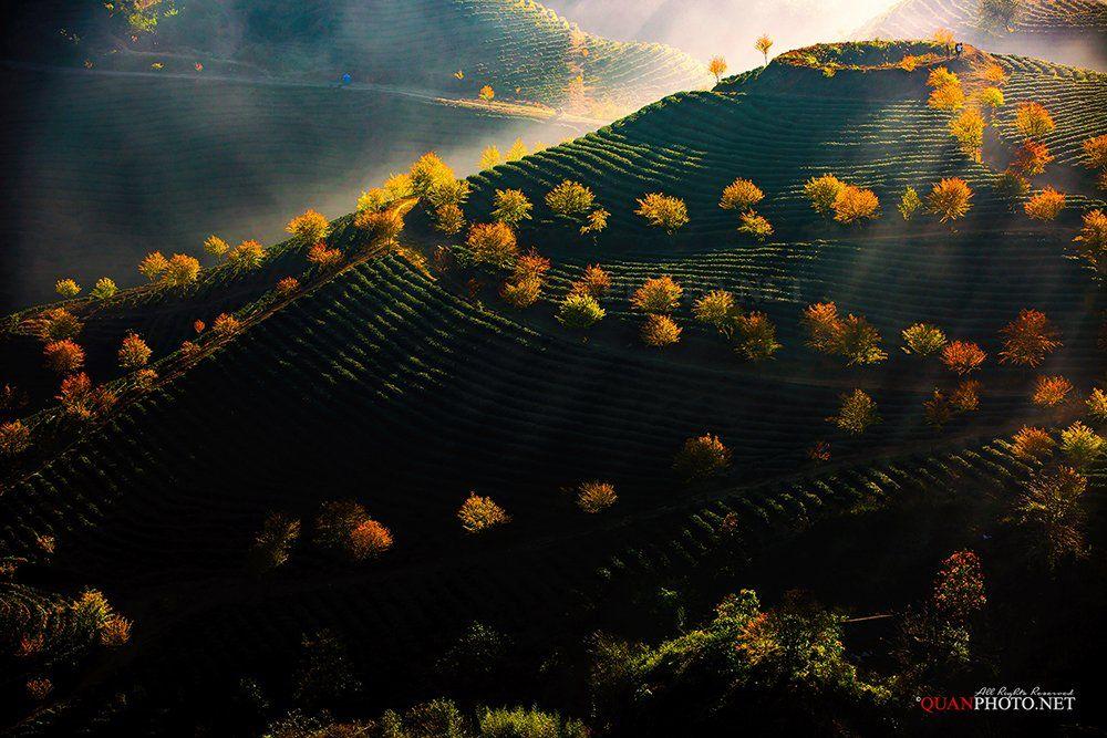 quanphoto, landscape, nature, sunlight, rays, mountains, hill, tea, plantation, trees, colorful, vietnam, quanphoto