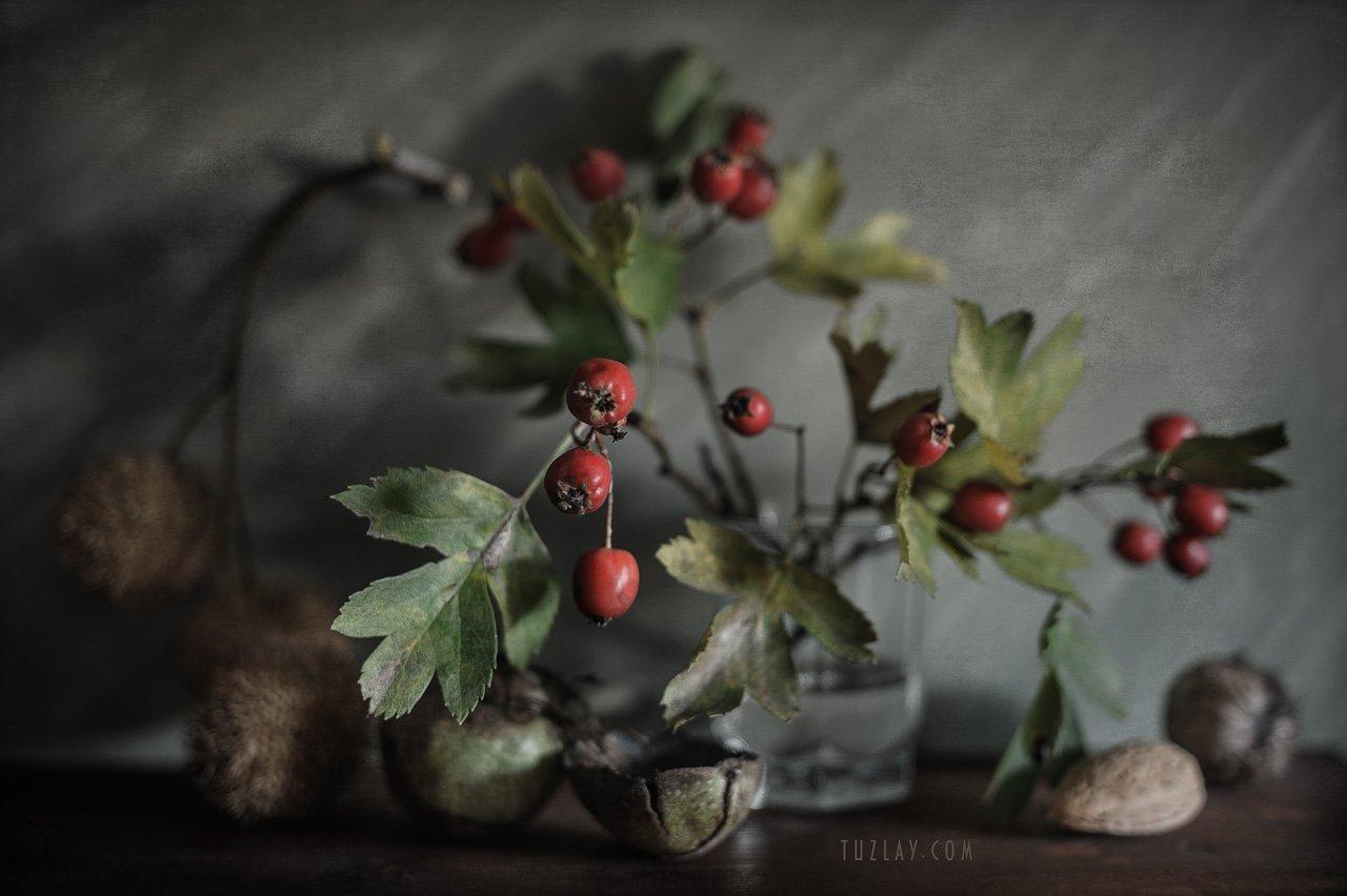 боярышник, стакан, красные ягоды, орехи, Владимир Тузлай