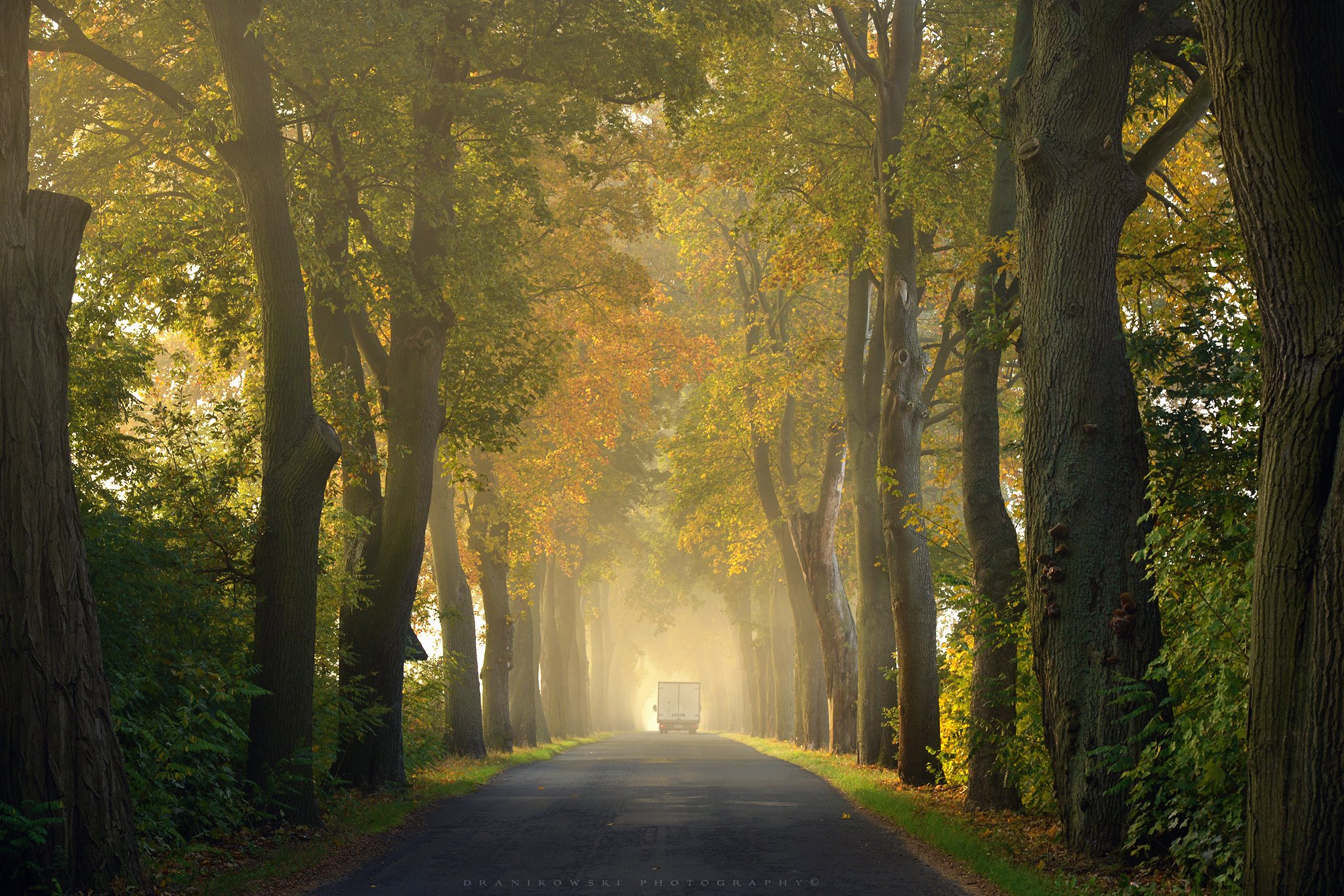 tree tunnel road path foggy mist dranikowski magic autumn fall trees light, Radoslaw Dranikowski