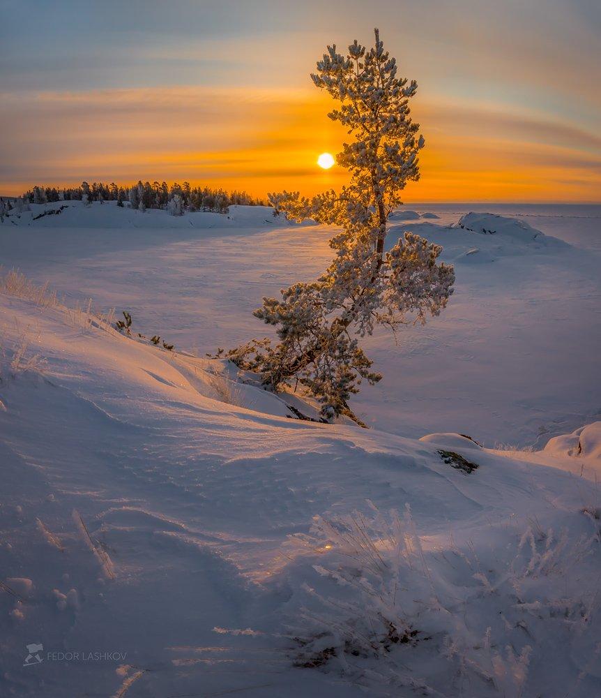 ладожское озеро, карелия, шхеры, природа, скала, остров, зима, рассвет, солнце, снег, сосна, иней, Лашков Фёдор