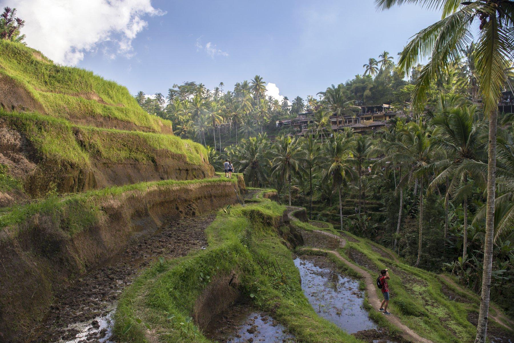 Бали, Индонезия, рис, террасы, экзотика, тропики, фермер, туристы, отдых, путешествие, Тегаллаланг, Марина Мудрова