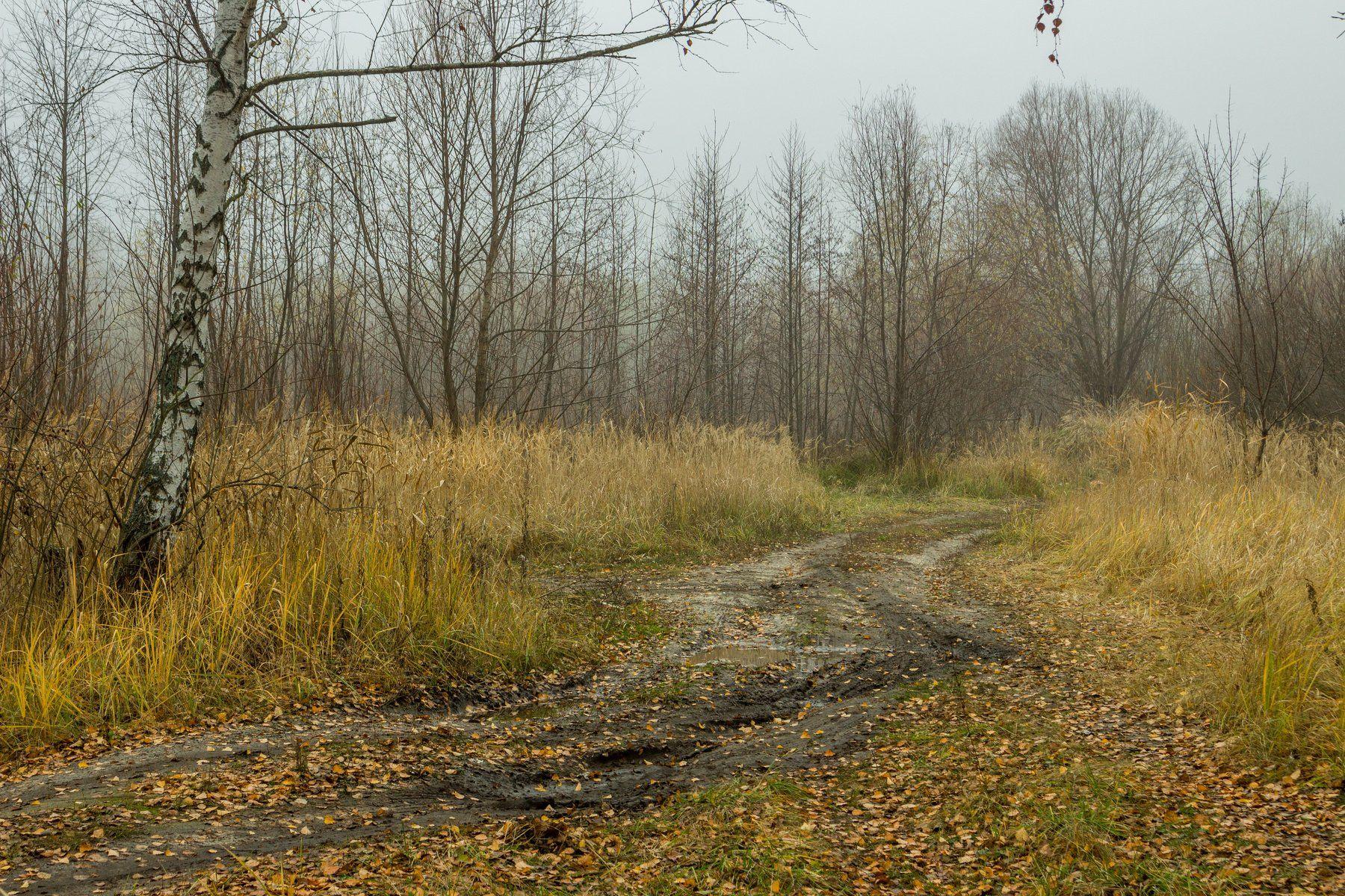 туман, осень, лужи, дорога, грязь, берёзы, Руслан Востриков