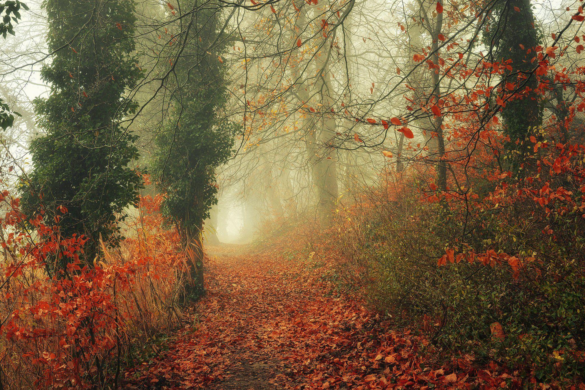 осенняя тропа autumn path misty fall trees magic mist foggy road dranikowski leaves, Radoslaw Dranikowski