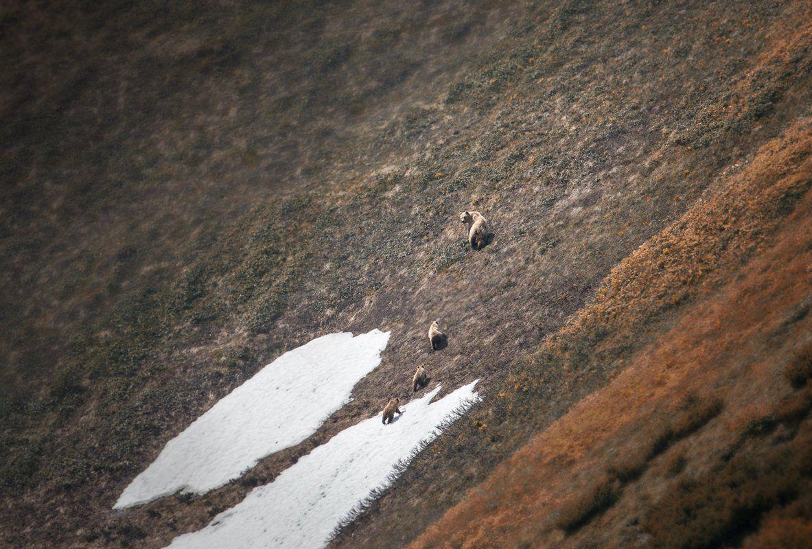 камчатка,медведи,животные,природа,россия,фототур,путешествие, Elena Pakhalyuk