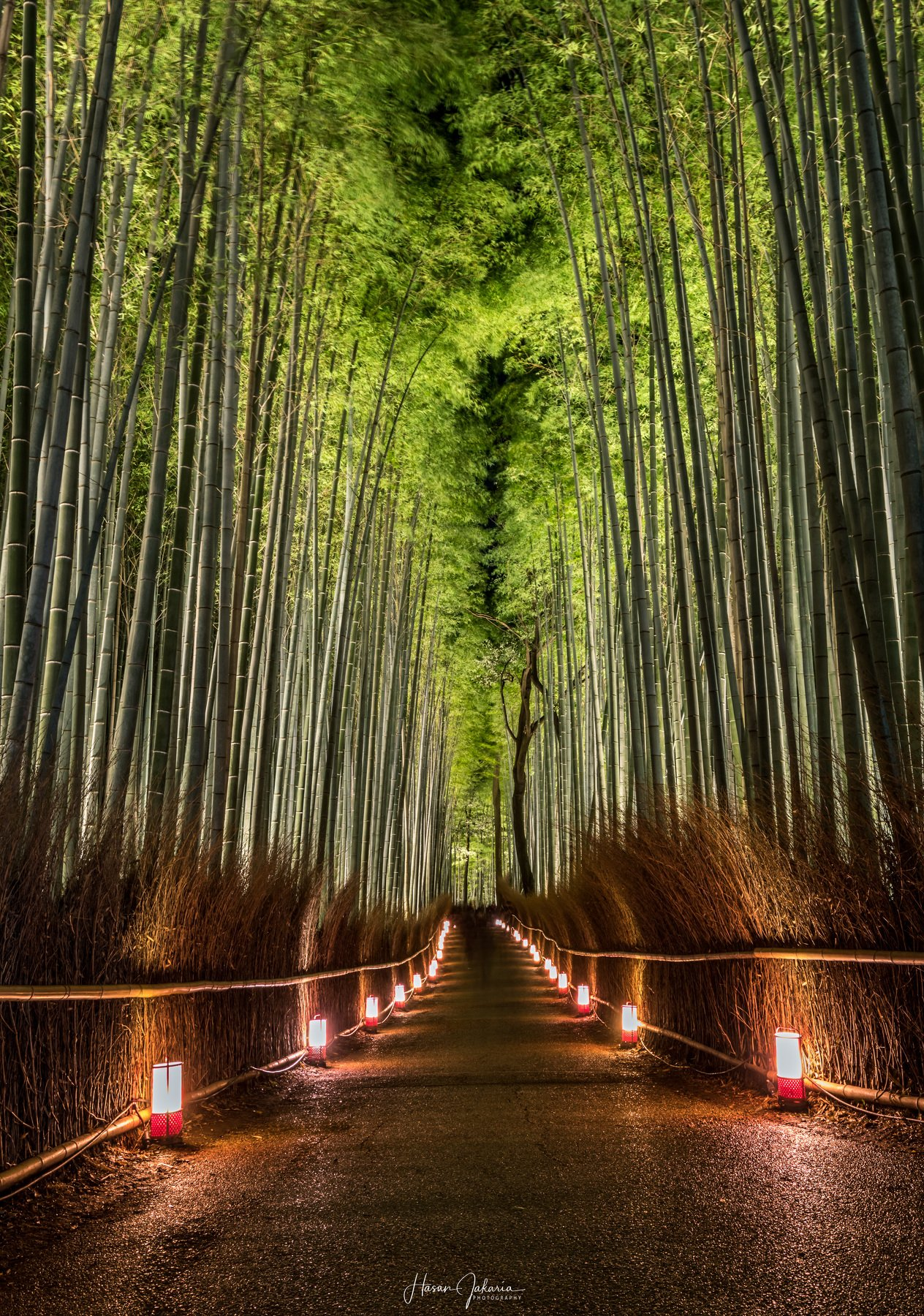 night nature long exposure forest lights kyoto japan bamboo, Hasan Jakaria
