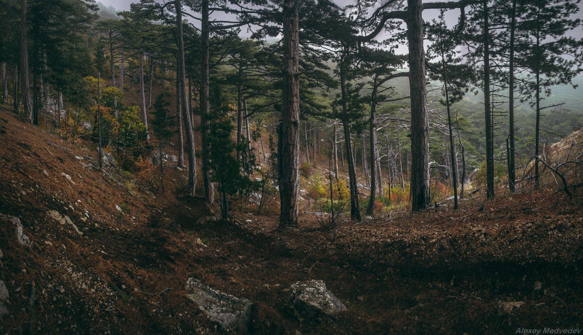 крым, сосны, лес, горы, Алексей Медведев
