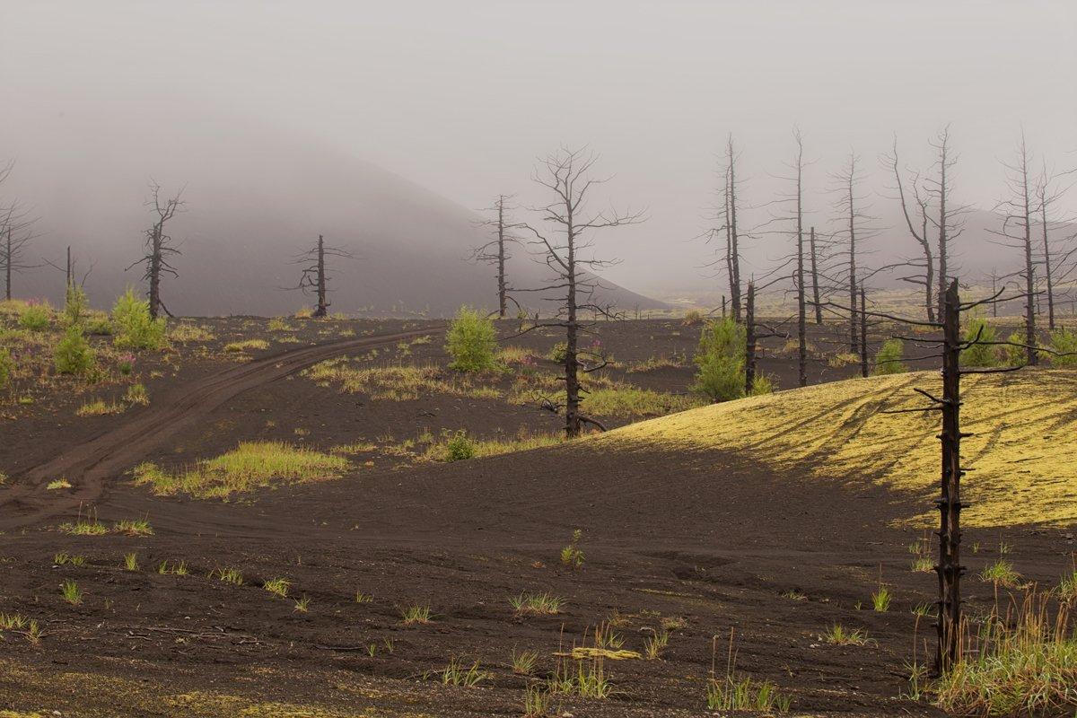 камчатка, лес, мертвый лес, вулкан, природа, пейзаж, россия, туман,фототур,сопка, Elena Pakhalyuk