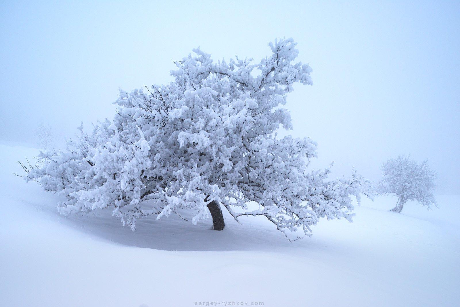 карпаты, украина, природа, зима, дерево, пейзаж, туман, fog, carpathians, ukraine, nature, landscape, winter,, Сергей Рыжков