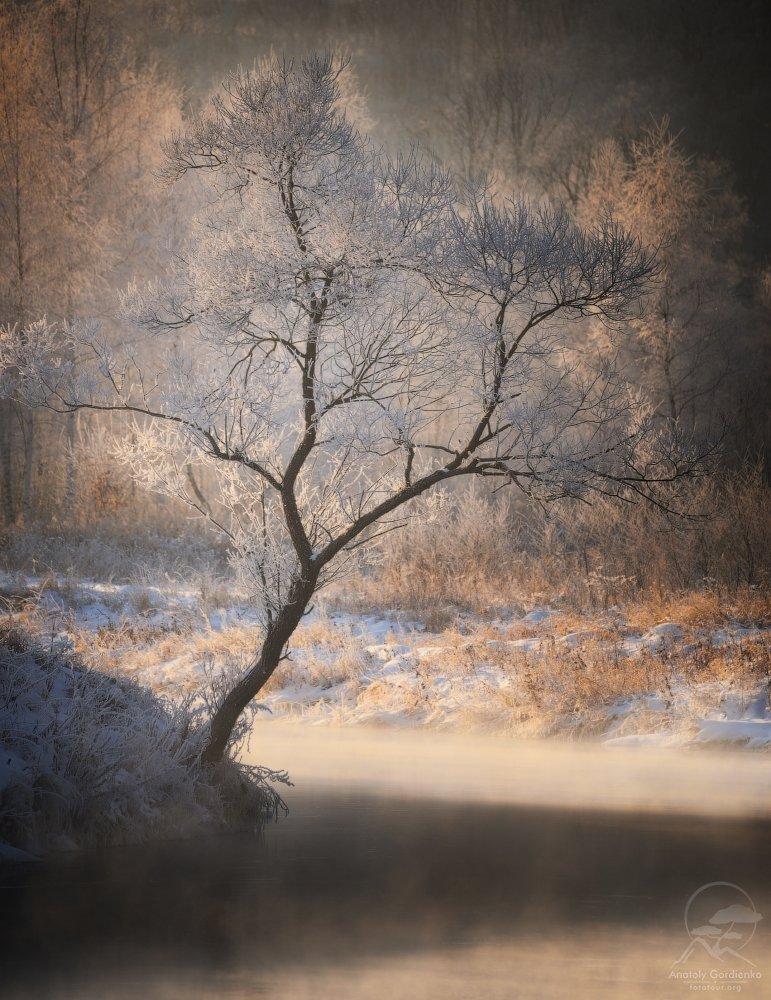 пейзаж, природа, река, зима, иней, дерево, истра, Анатолий Гордиенко www.fototour.org